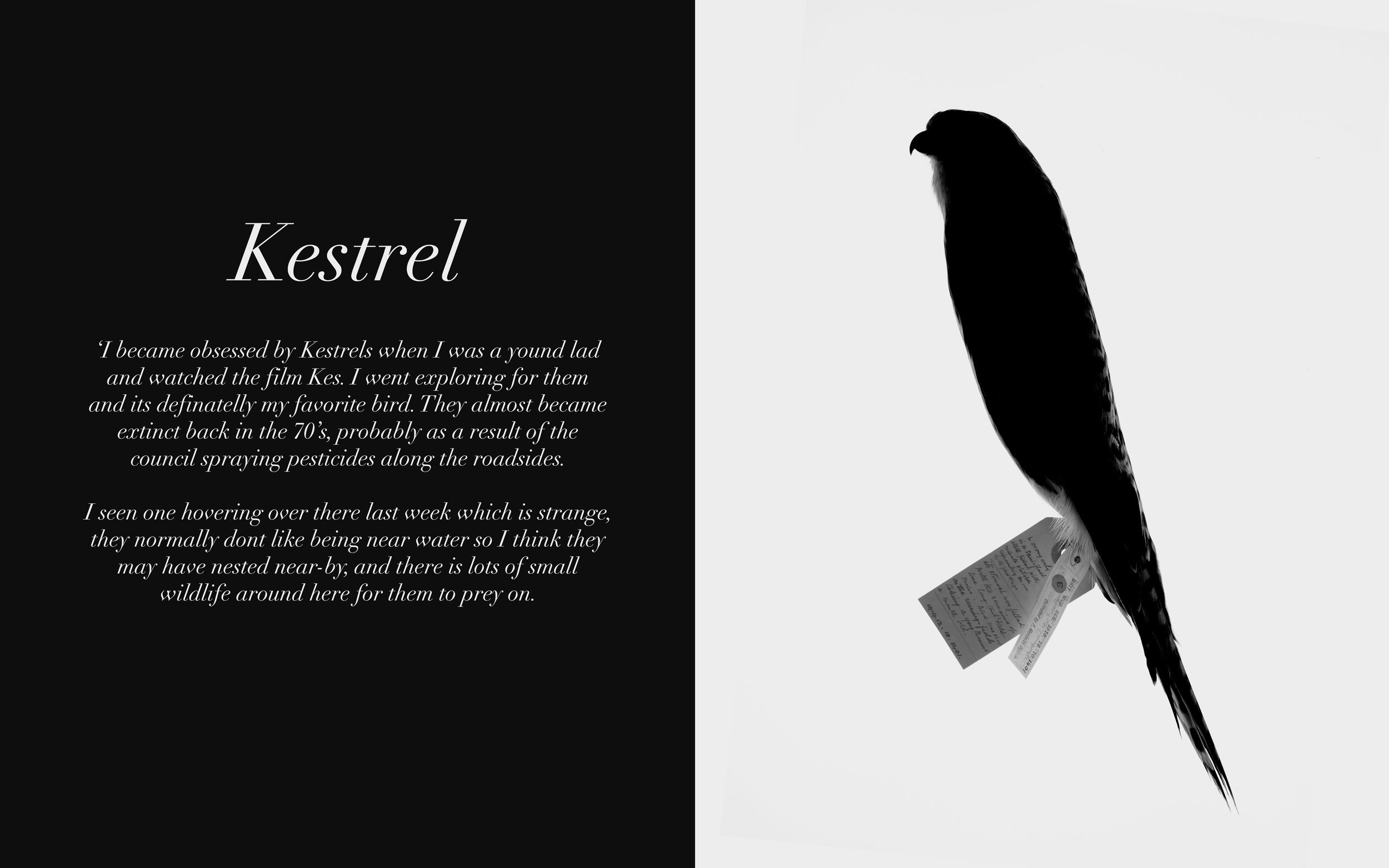 Image: Kestrel Twitters, 2009-13 Lambda C-Type Print 32 x 20 inches