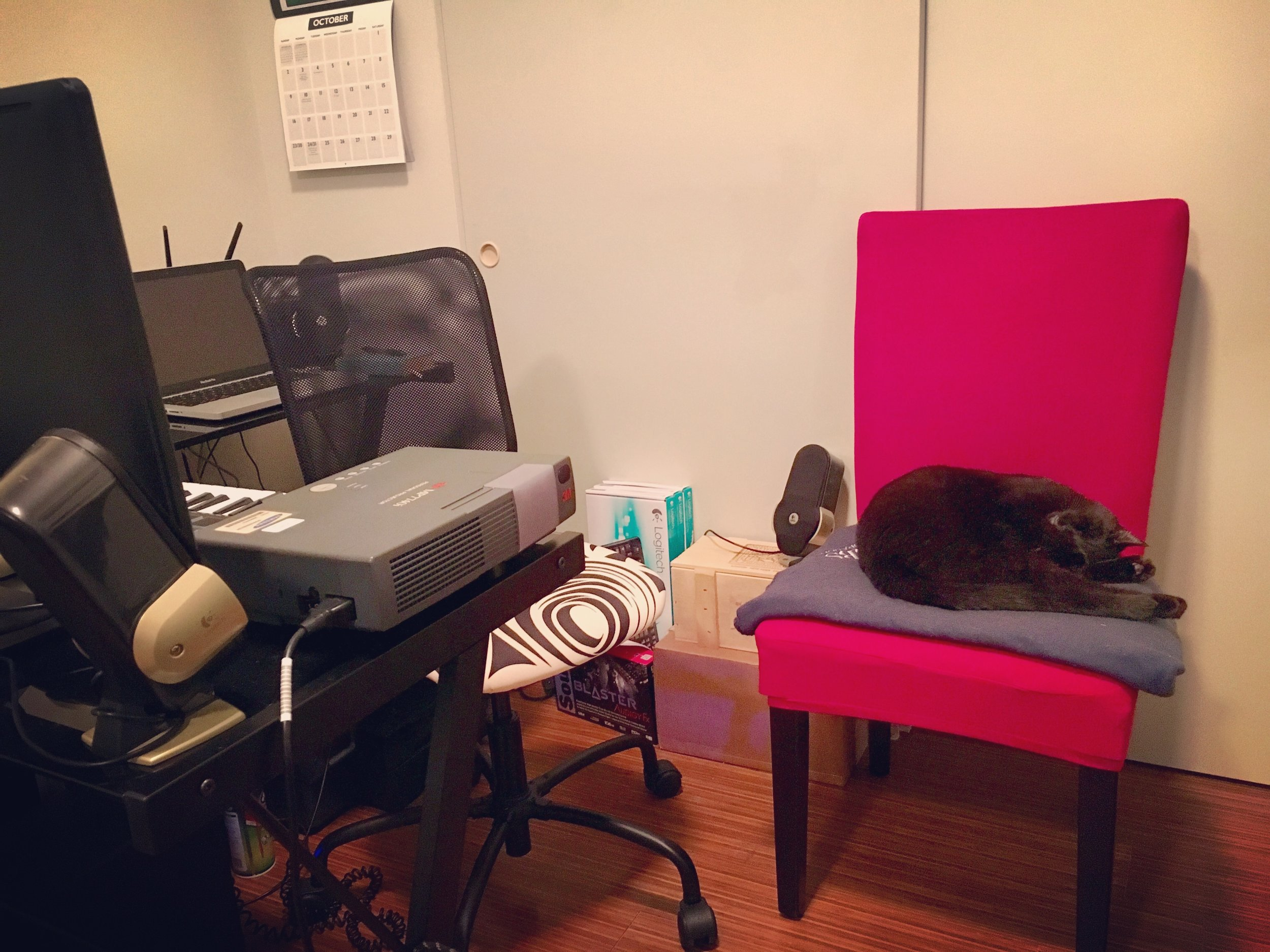 The office cats, bowie and Isaac (not pictured), help keep us calm.