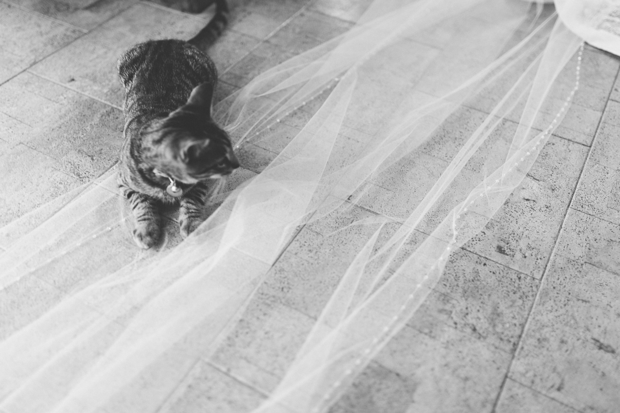 Cat on wedding veil