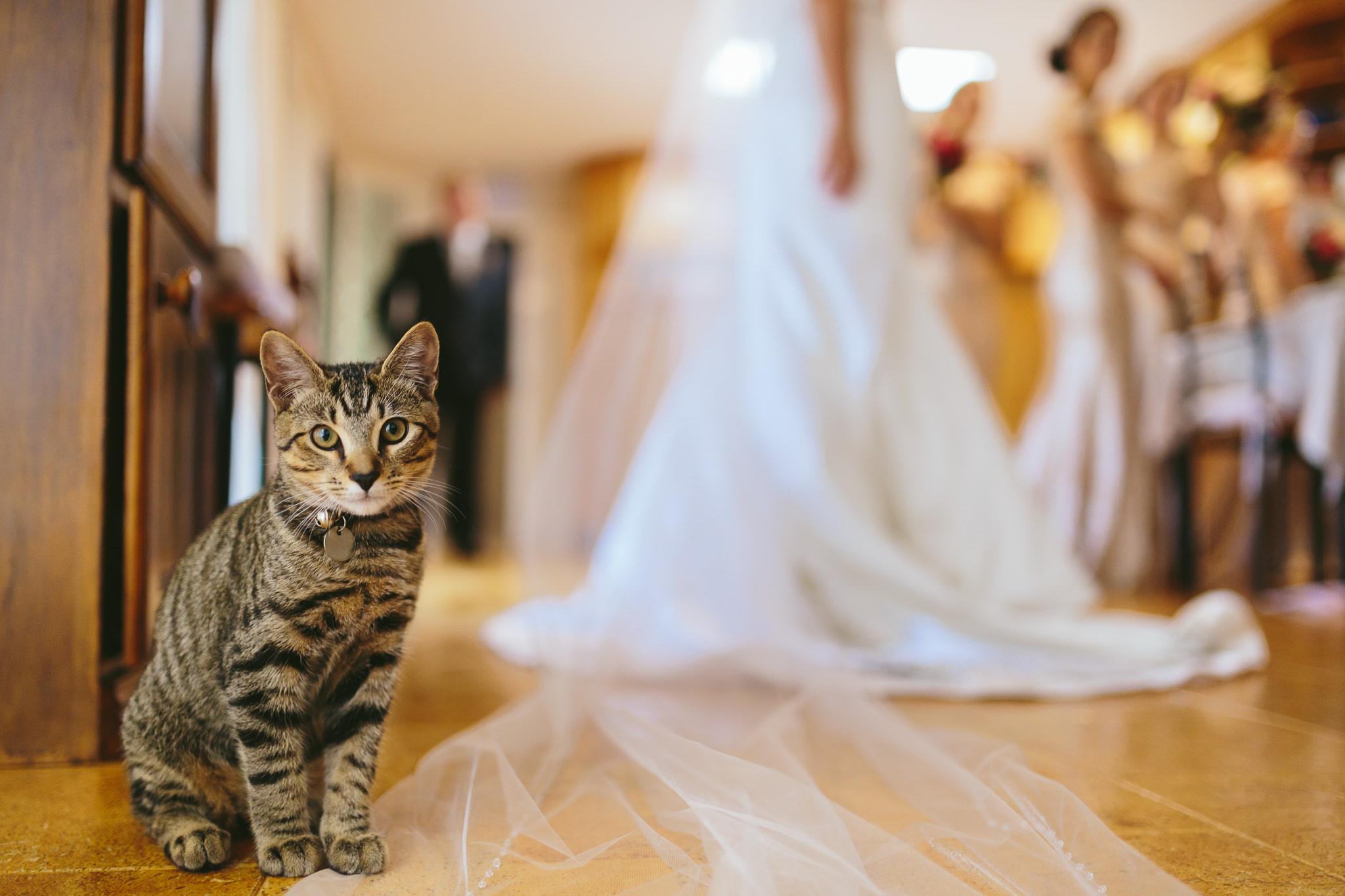 Cat on wedding day