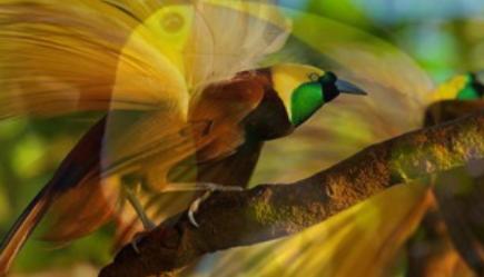 Birds of Belize.png