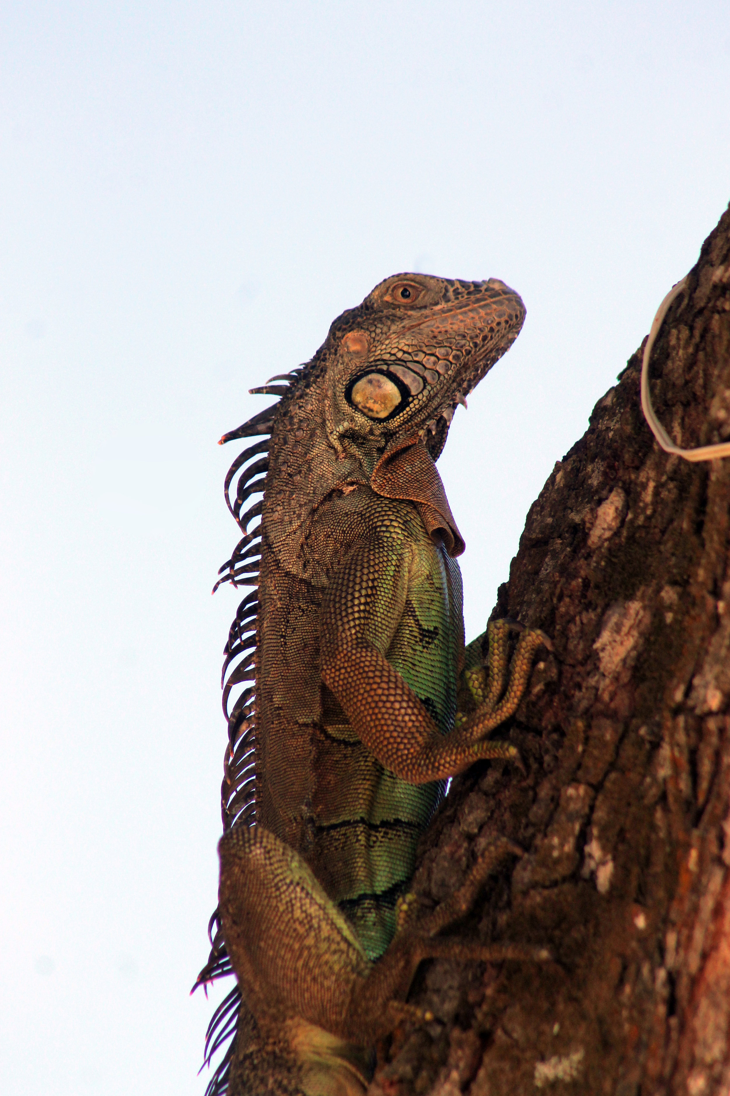 aaa_longtail in tree.jpg