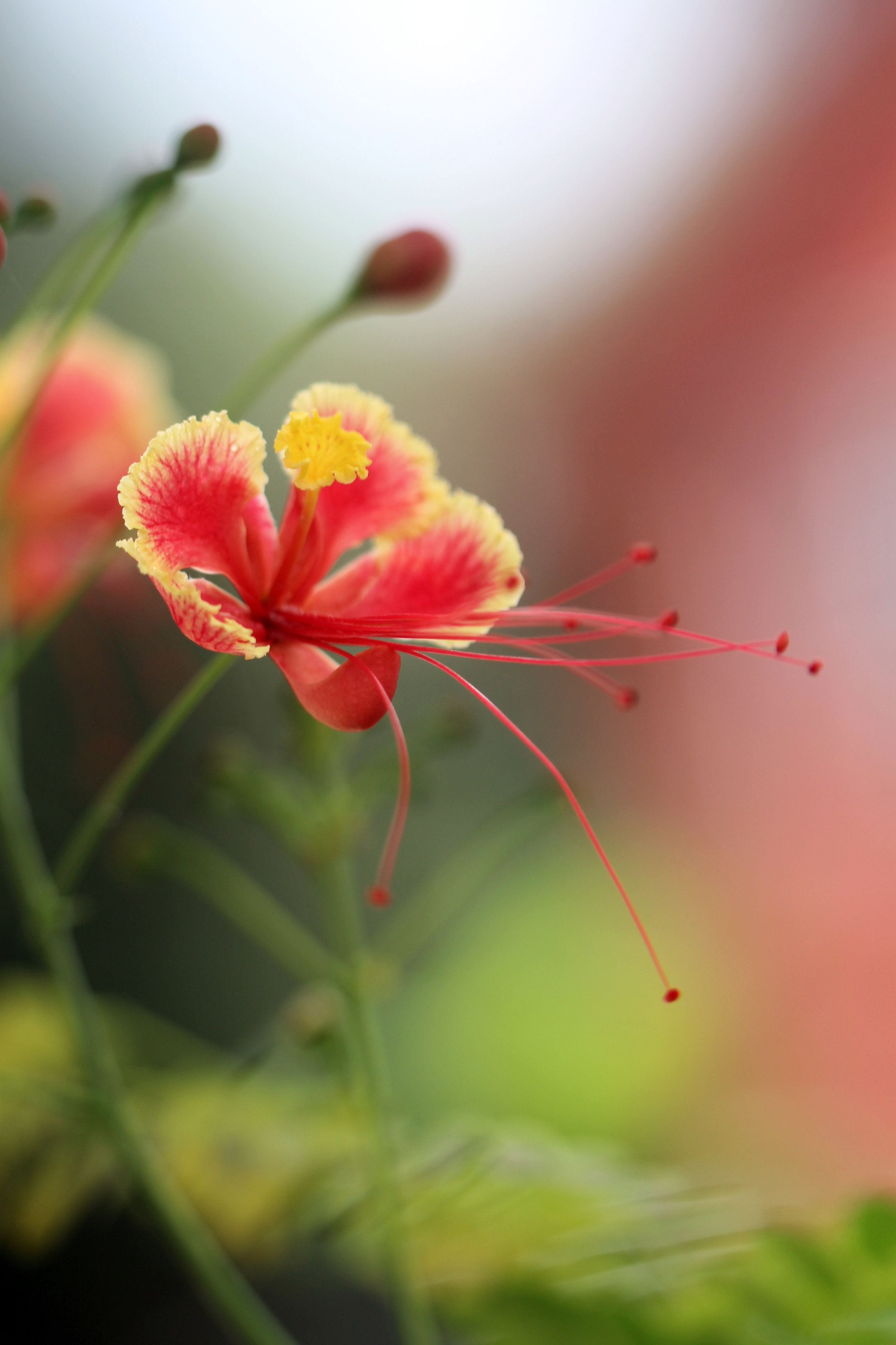 aaa_new flower.jpg