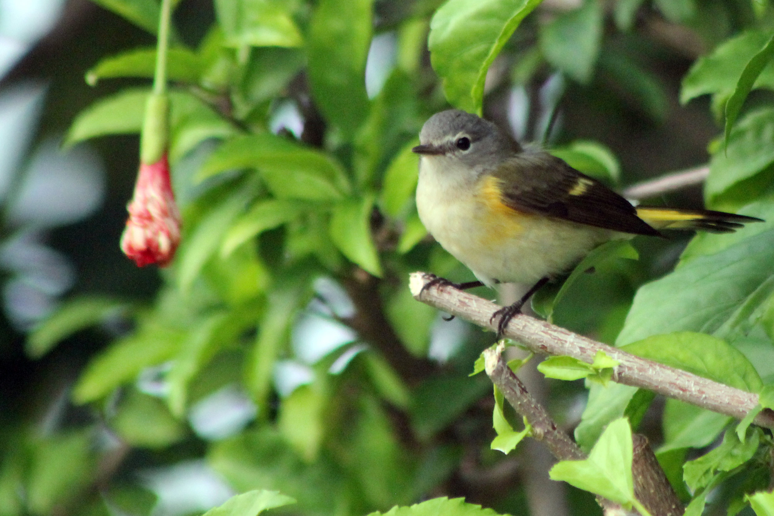 aaa_little bird 1.jpg