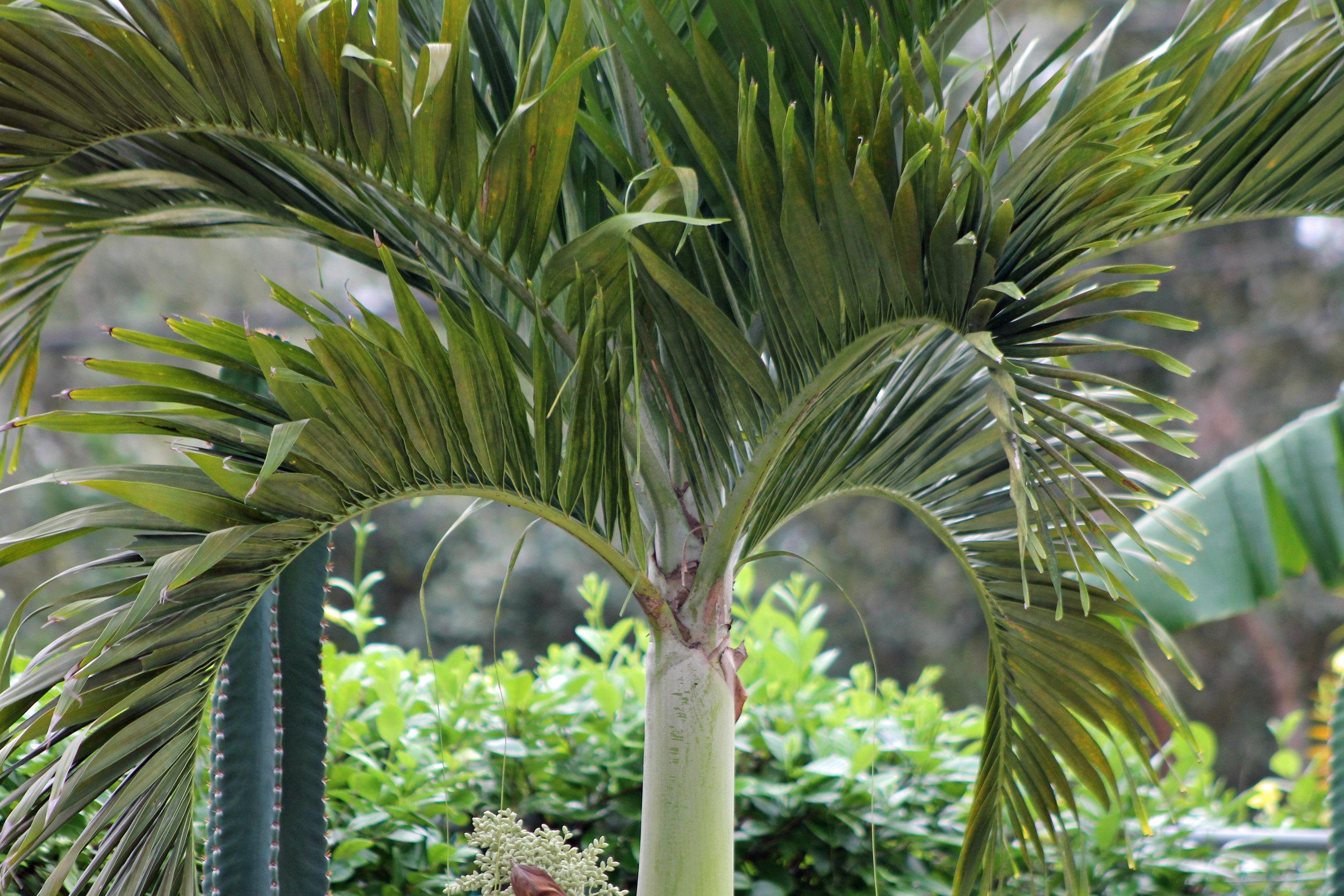 aaaa_Jim_Palm Tree.jpg