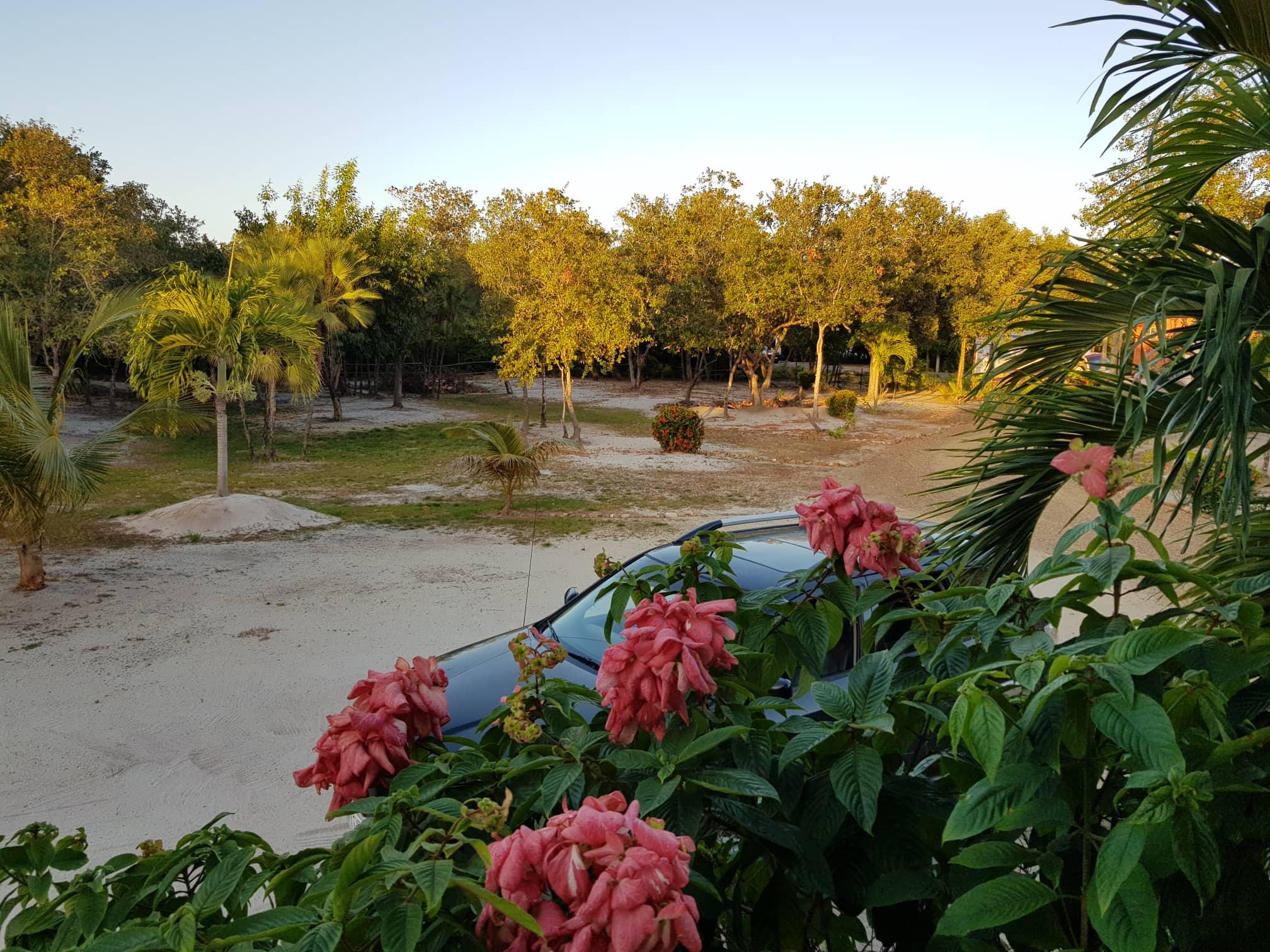 plants property.jpg