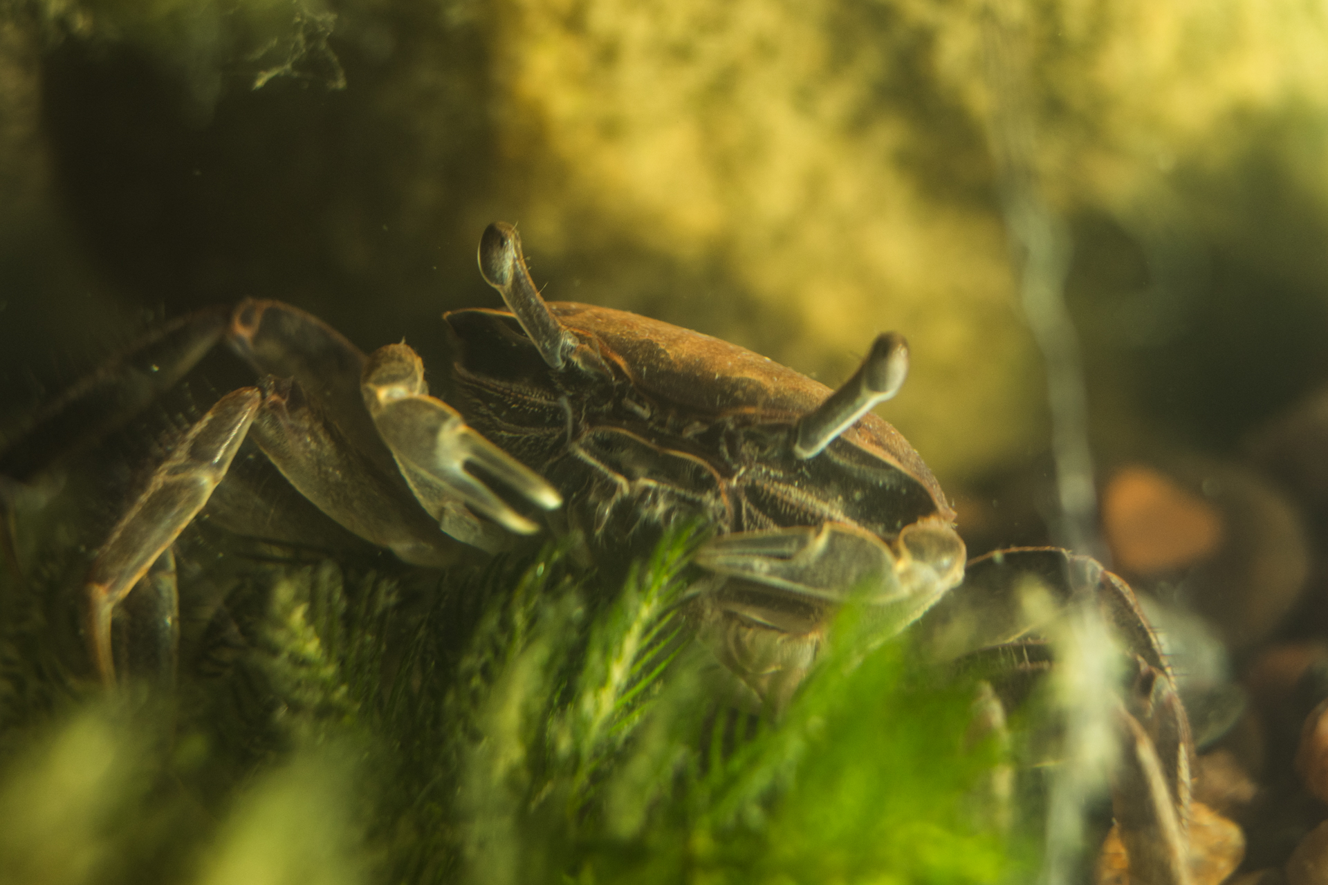 We adopted 4 tiny crabs and got them a fancy tank from Craigslist