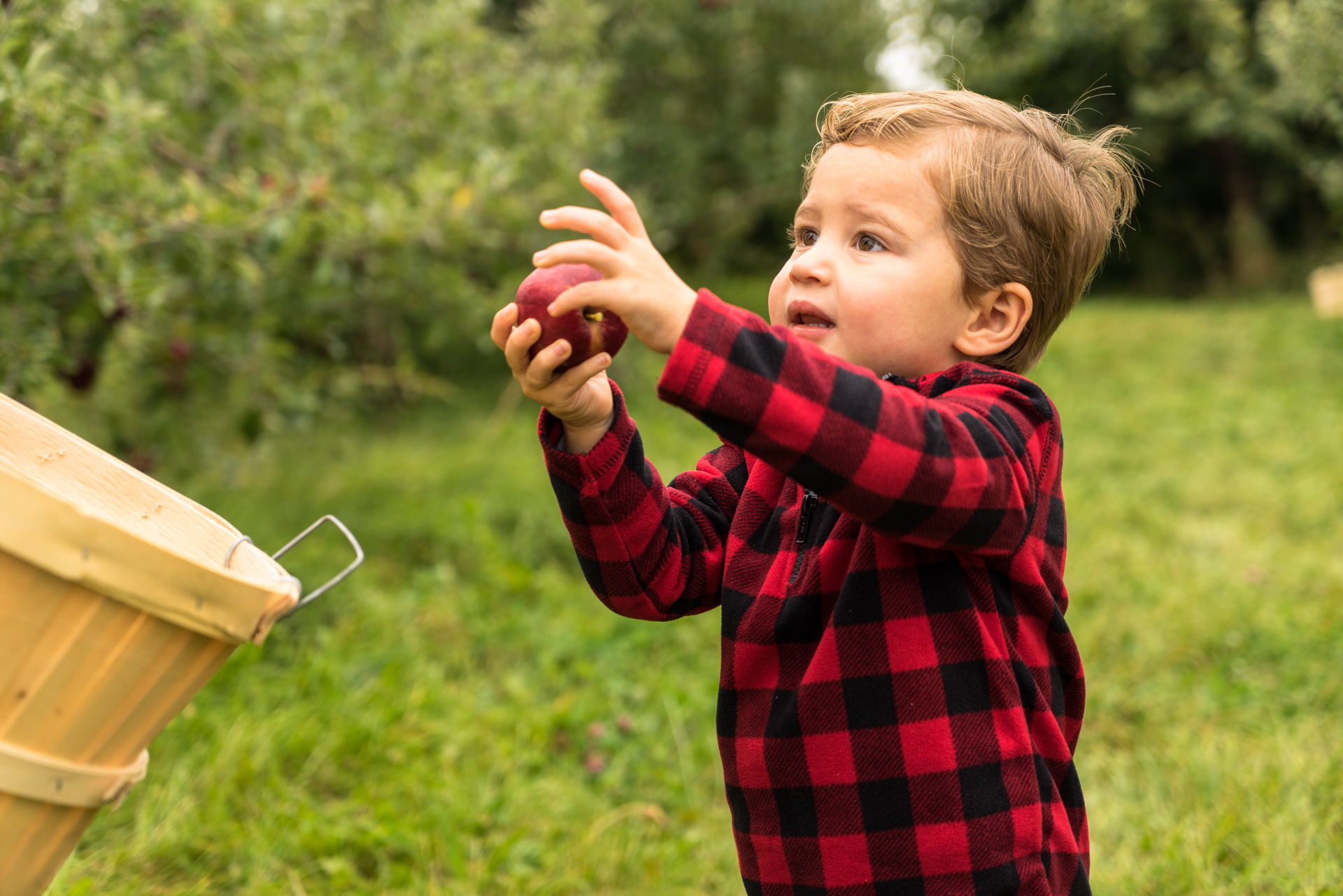 Jenny's cousin's son partaking in apple picking