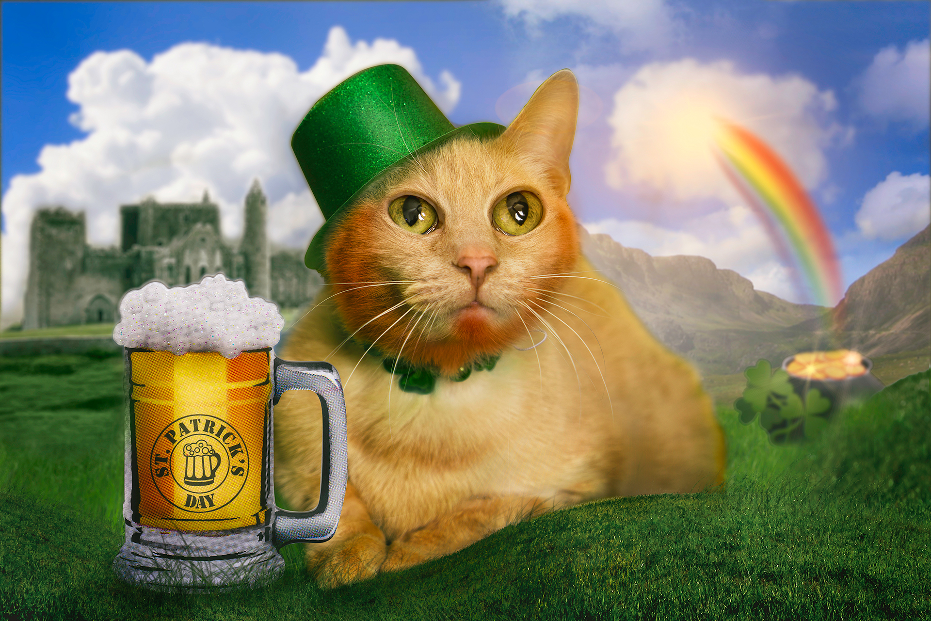 Kevin the Cat steals our hearts while we try to steal this leprechaun's gold. Everyone is a little Irish this St. Patrick's Day!