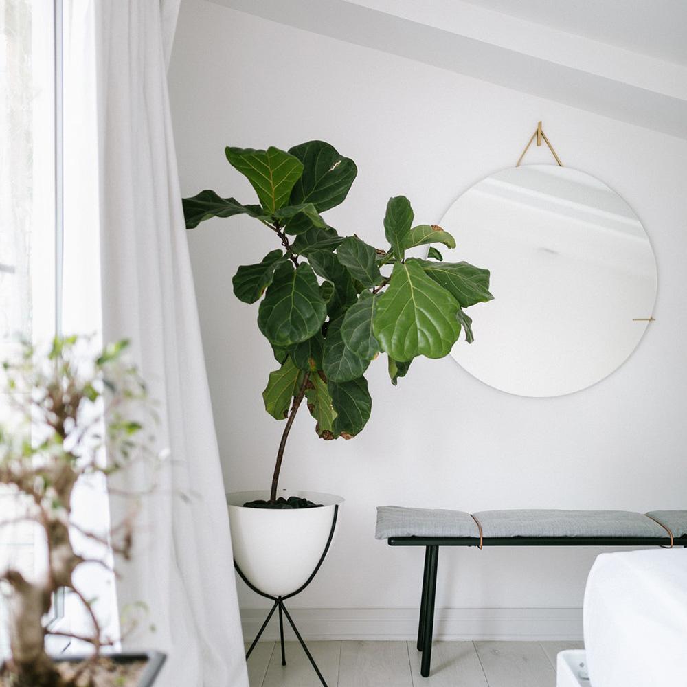 eastvillagetriplex-eau-bedroom-figtree.jpg