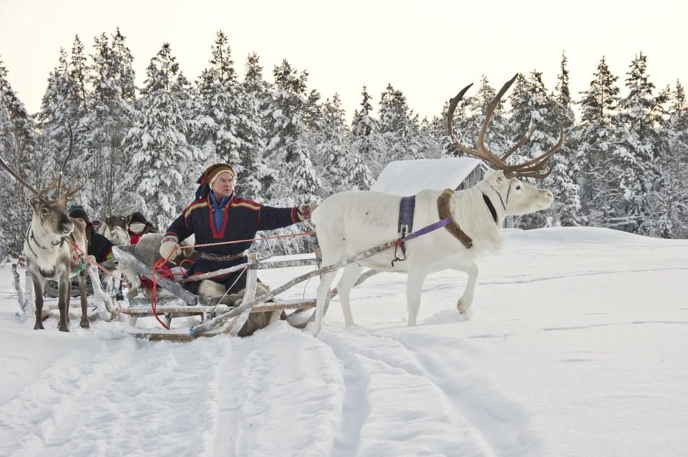 Reindeers-1.jpg