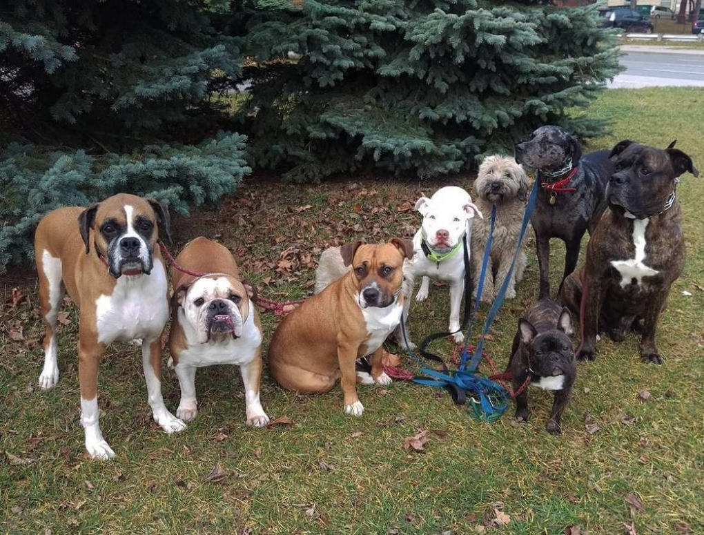 I SPECIALIZE IN: - Leash reactivity (towards humans and/or dogs and/or other stimuli)Working with your new rescue dogTerritorial behavioursResource guardingLeash pullingSeparation AnxietyIntegrating a new baby into the homeIntegrating a new pet into the homeAggressionDestructive behaviours at home
