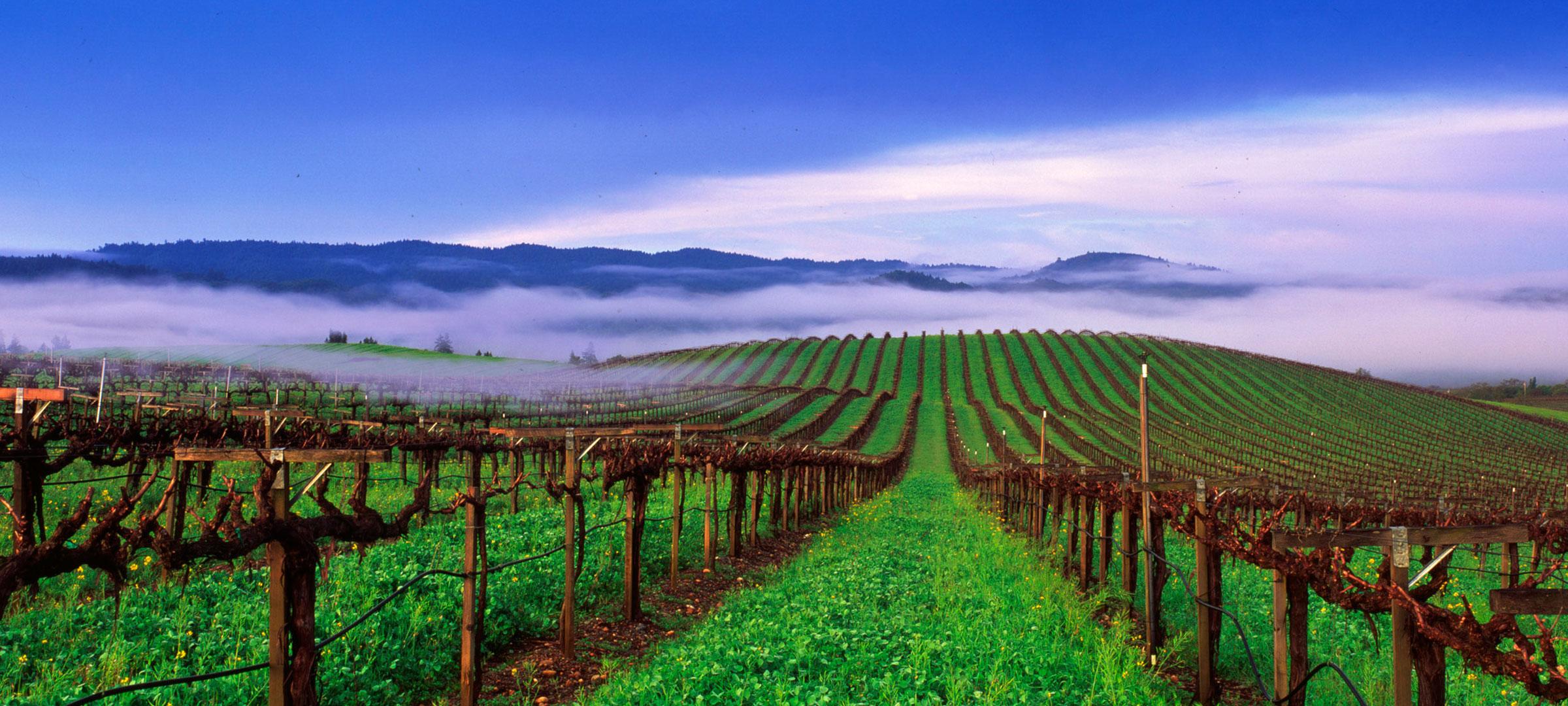 Join us for Dinner in the Vineyard