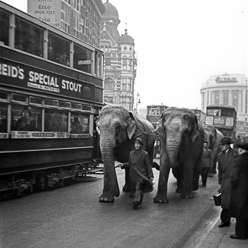 Attic Treasures: Newly Discovered Photographs of Pre-War London - Don't Take Pictures