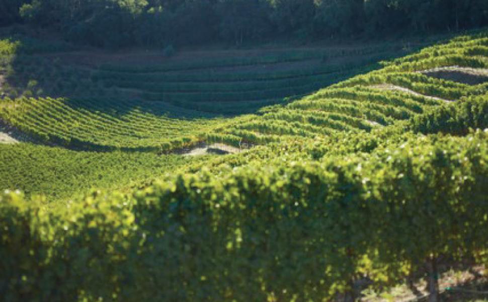 Gandona-Estate---Pritchard-Hill.jpg