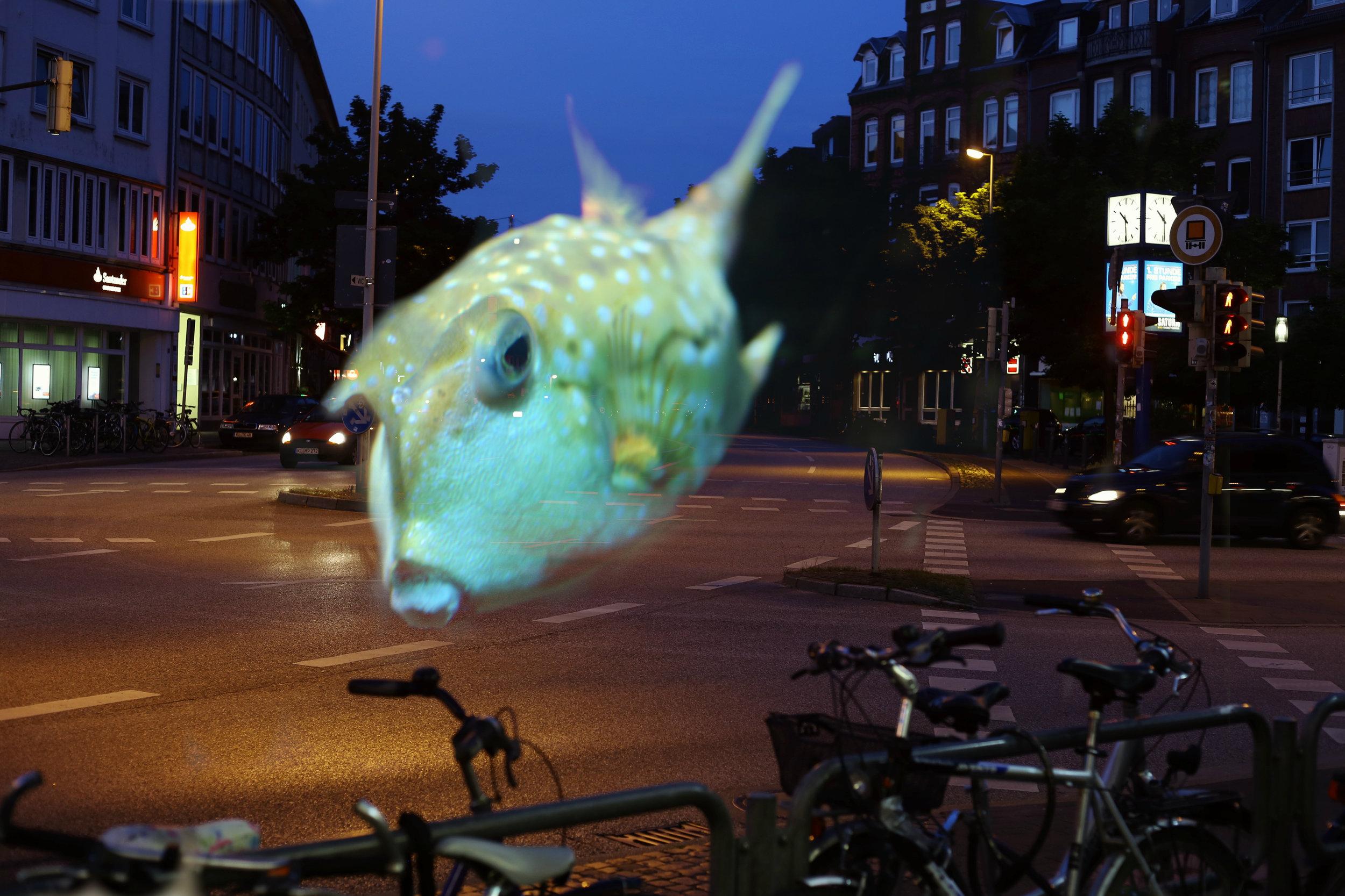 Fish crossing at Dreieksplatz.jpg
