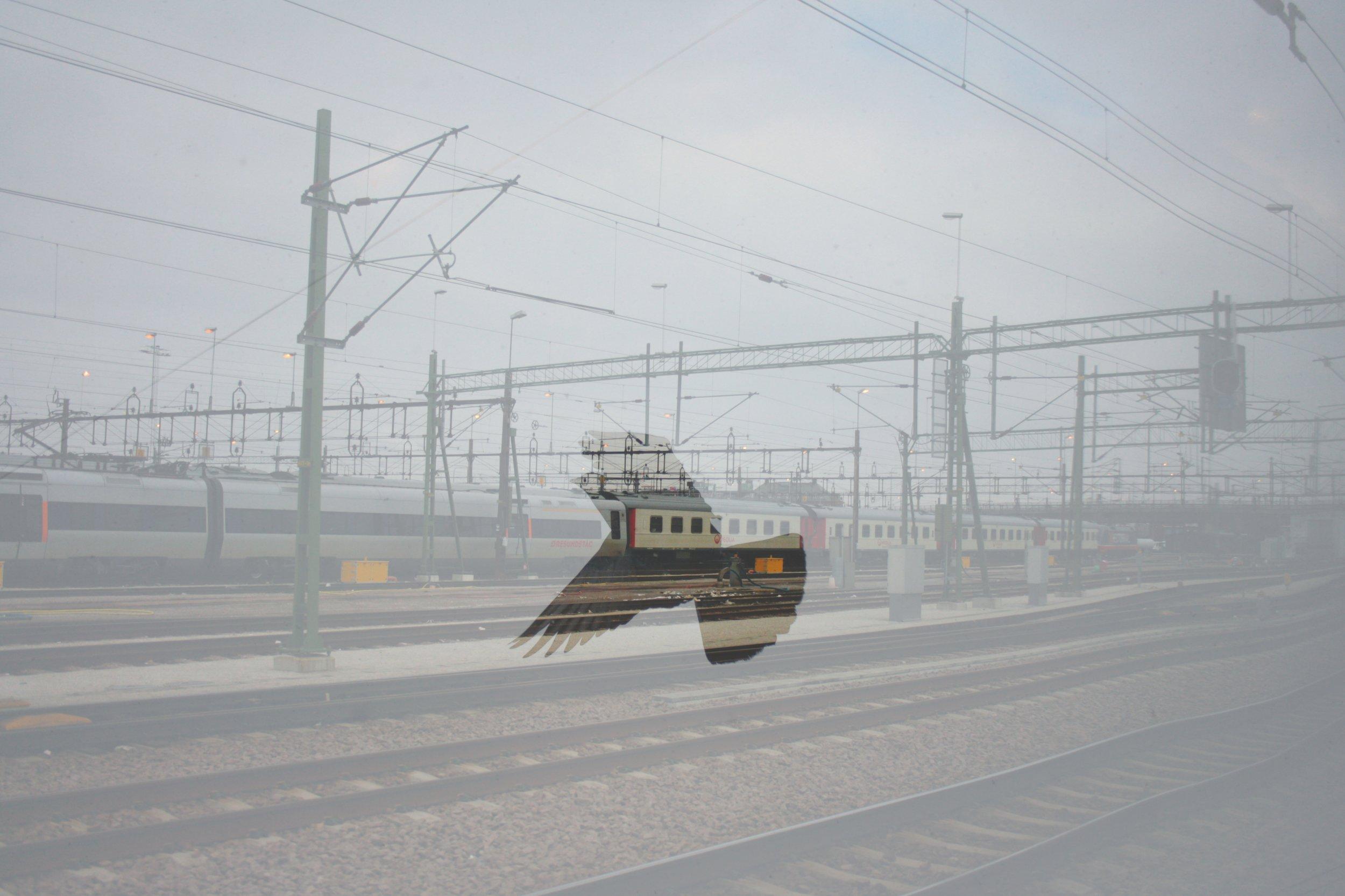 Kirowohrad's pigeon crossing Swedish railroad.jpg