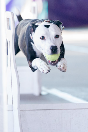 Flyball classes training az