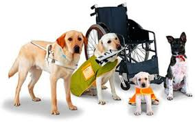 Service Dog Training, Kingman, AZ