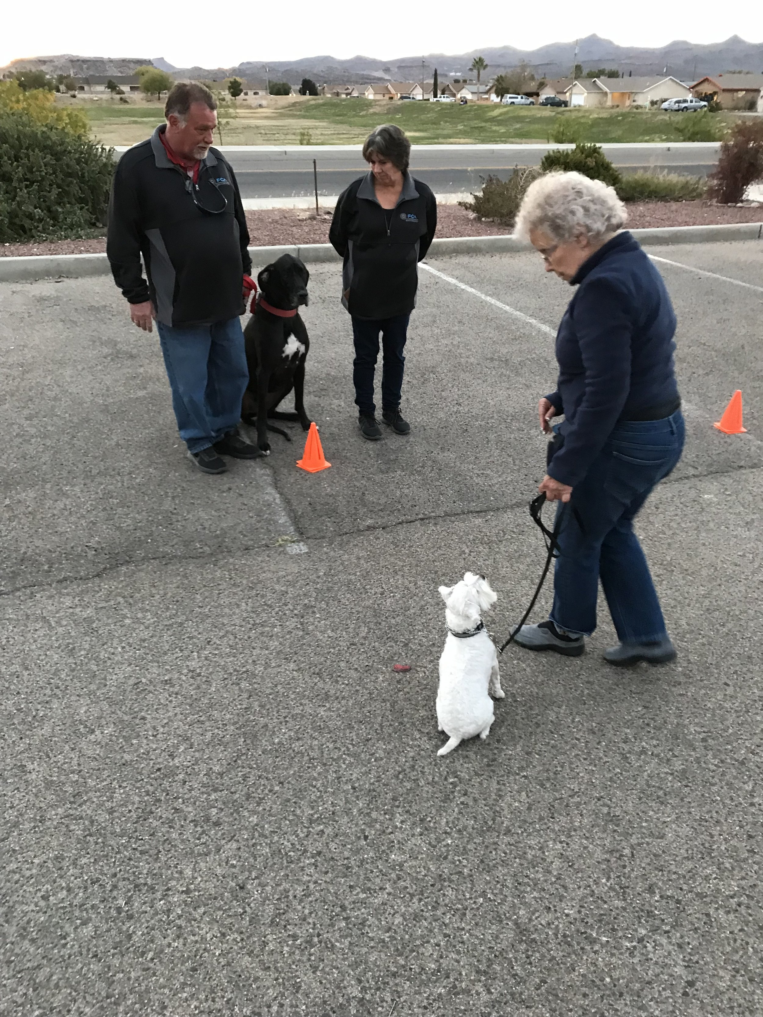 Obedience Training Kingman AZ
