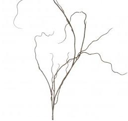 Curly Brown Twig