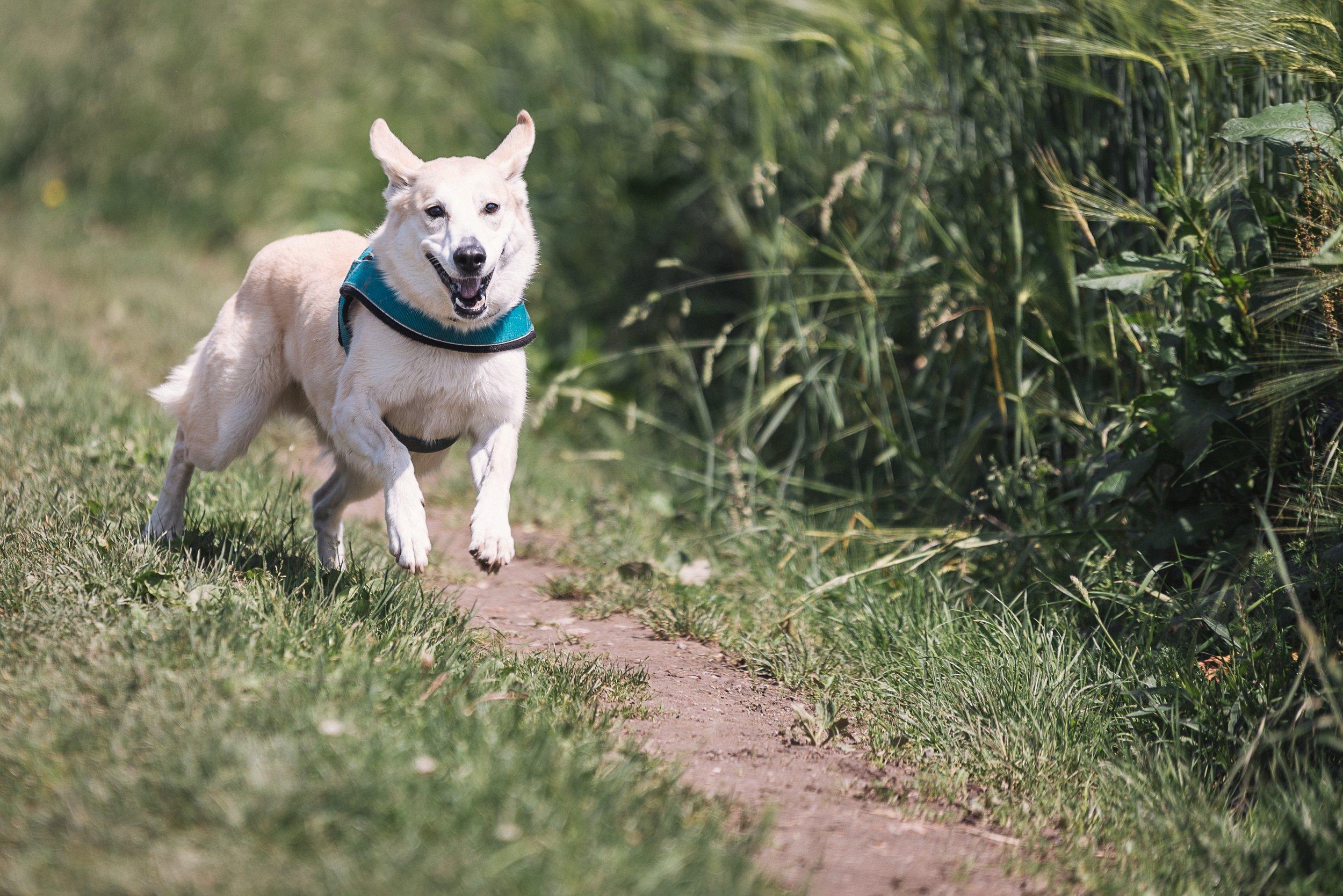running pup.jpeg