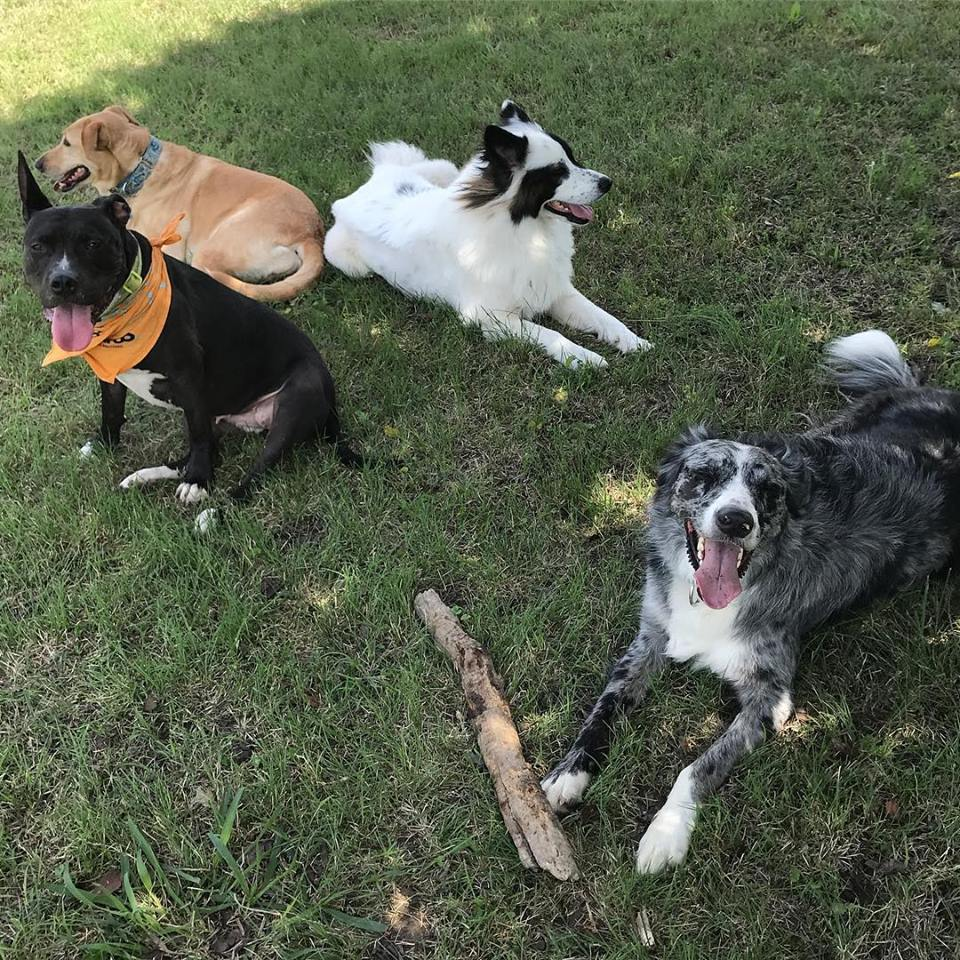 4+Dogs.jpg