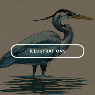 lllustrations_homepage.jpg