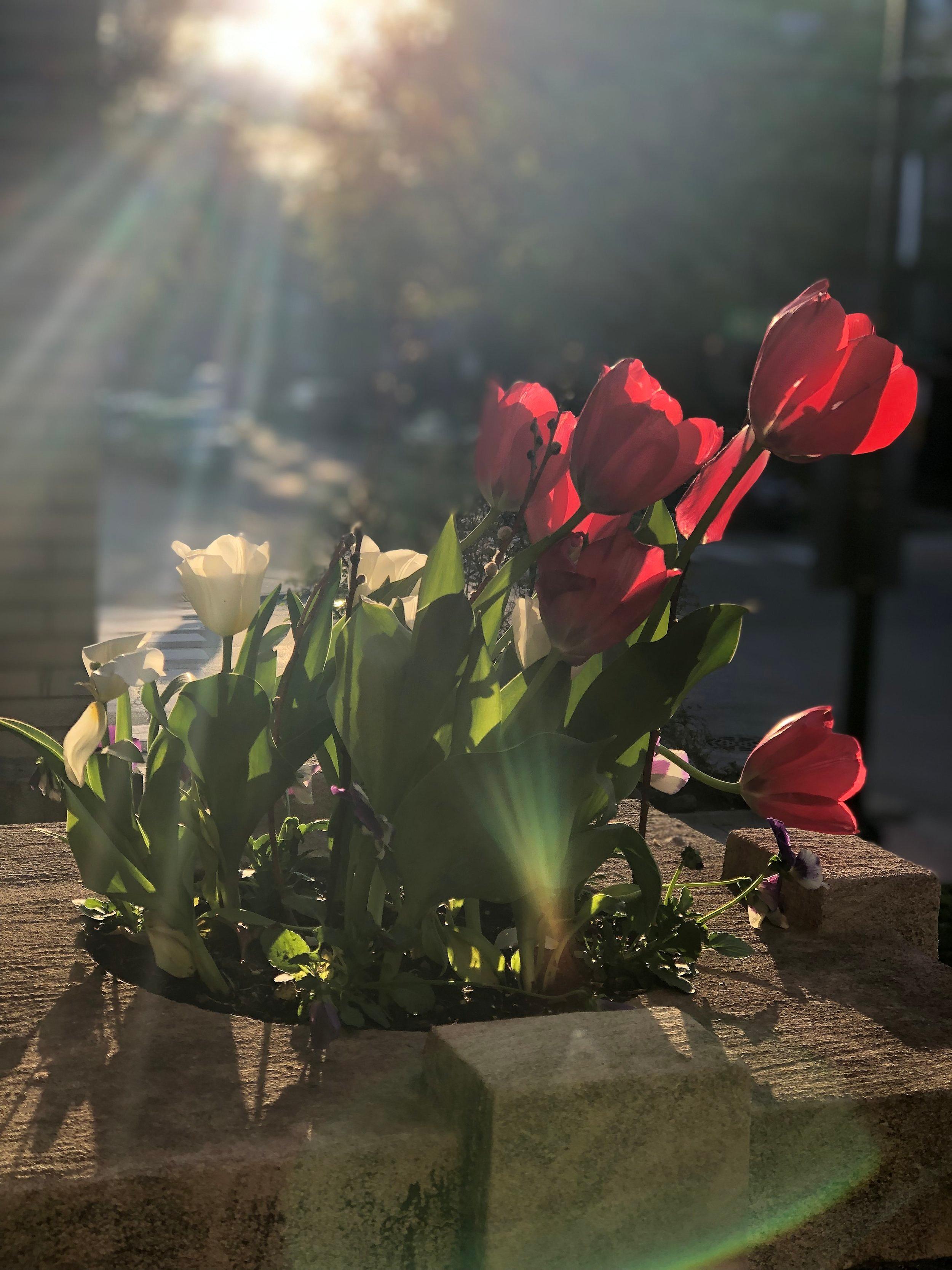 Spring Rays