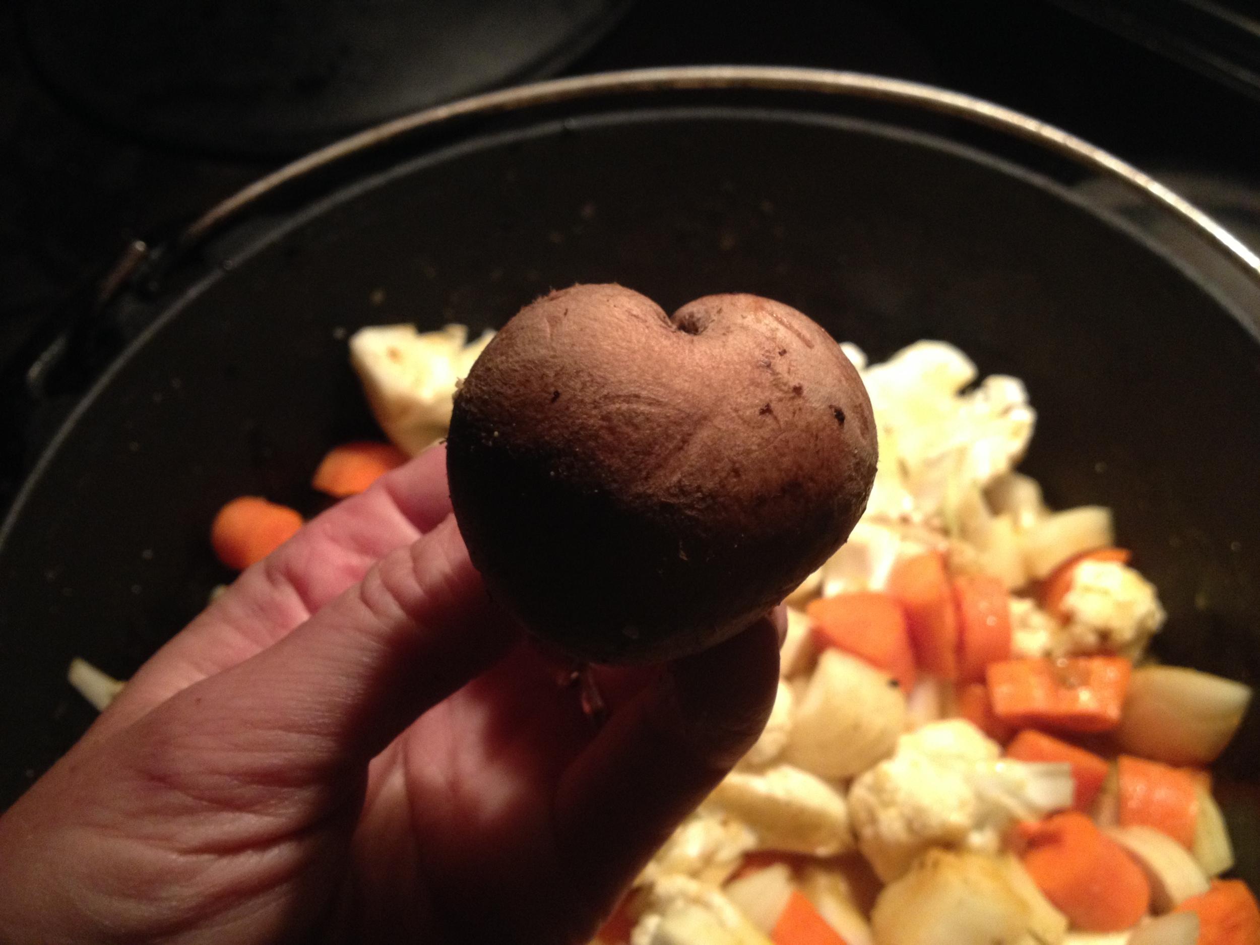 mushroom love.JPG