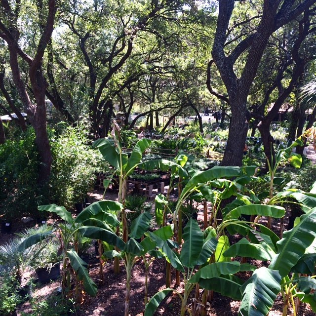 Bartion Springs Nursery
