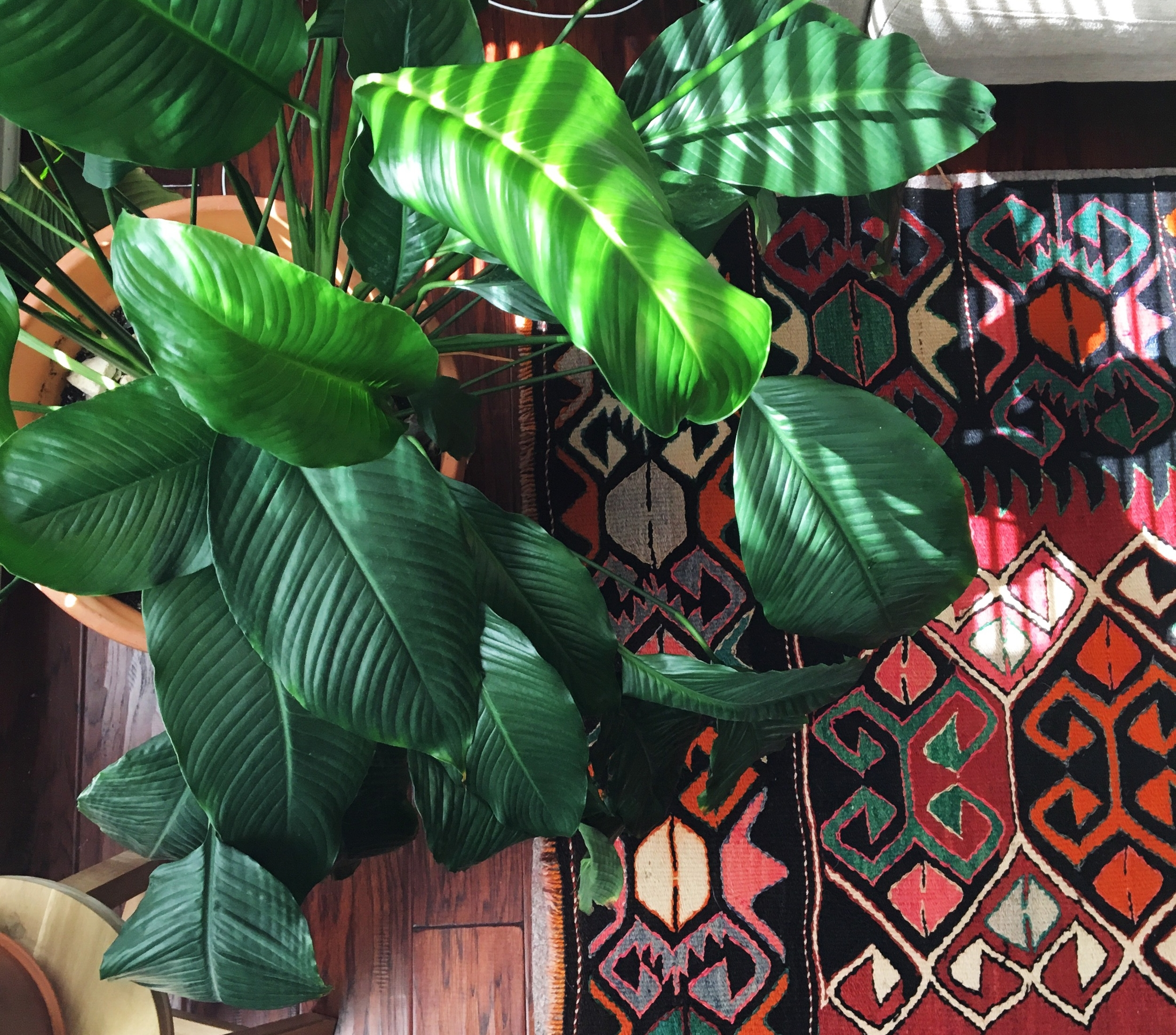 The hardest houseplants to kill. Buy these houseplants if you don't have a green thumb.