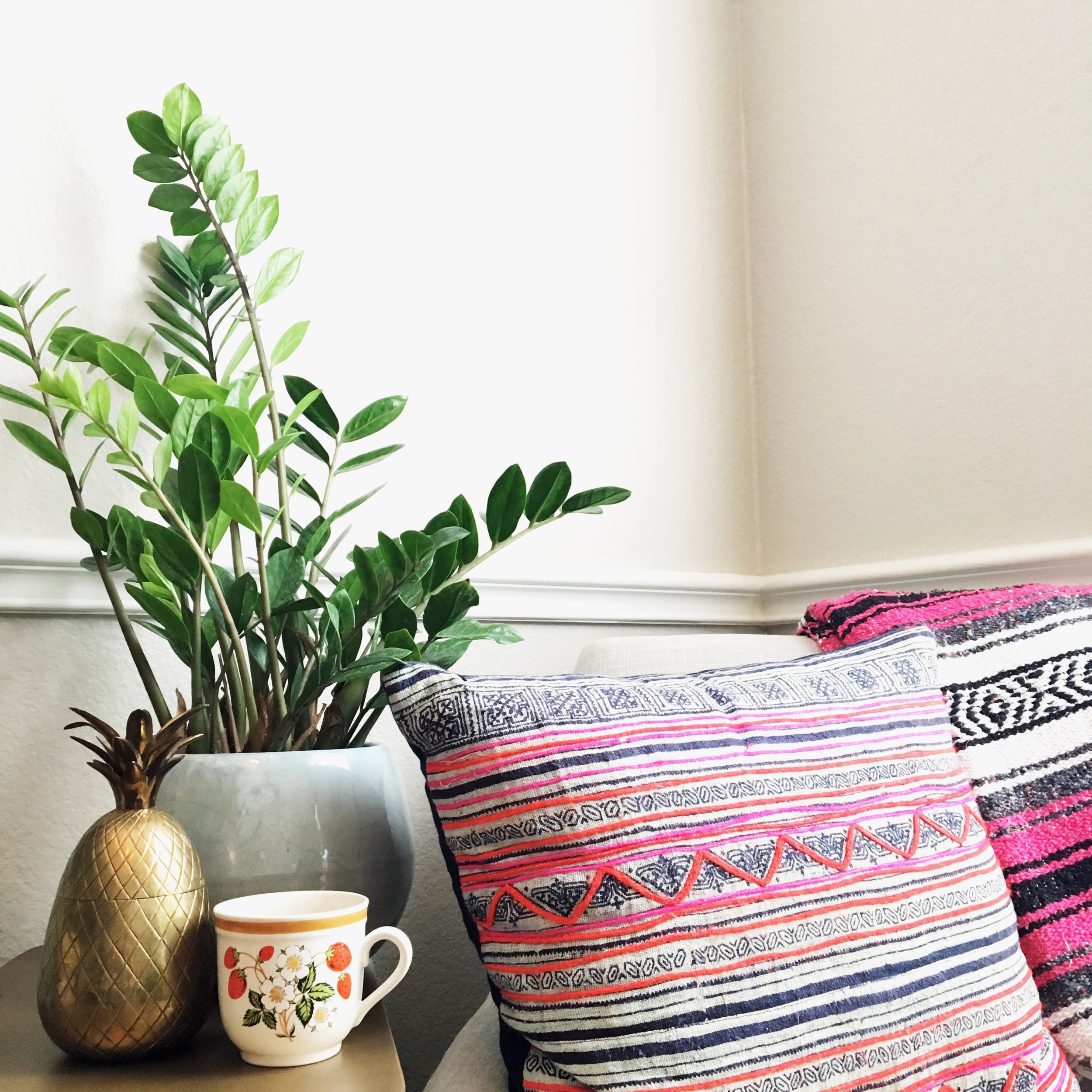 The ZZ plant is one of the best plants to keep alive indoors.