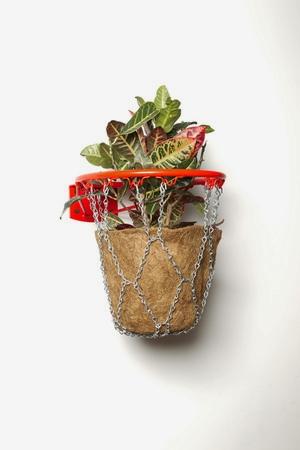 Hoop-Planter.jpg
