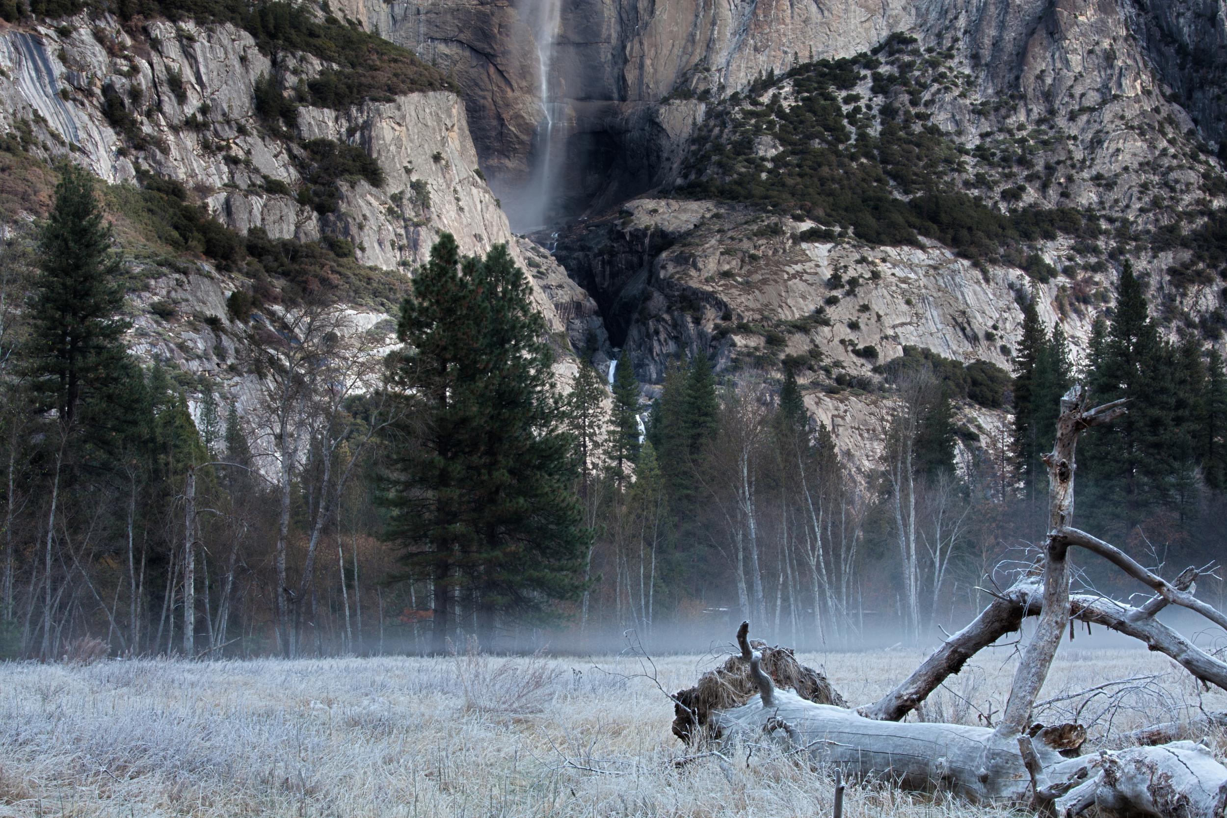 Meadow MorningColor.jpg