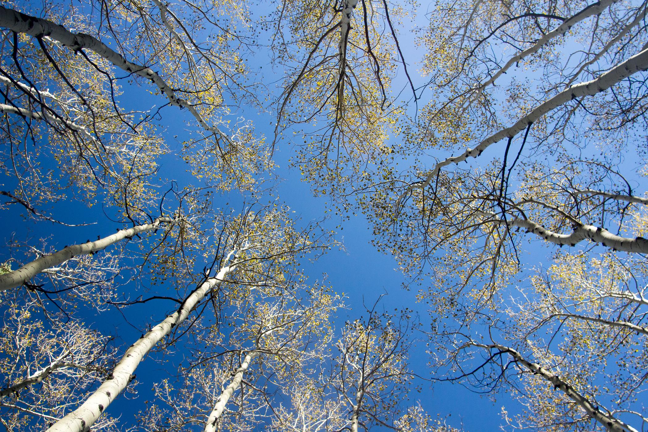 Aspen Sky.jpg