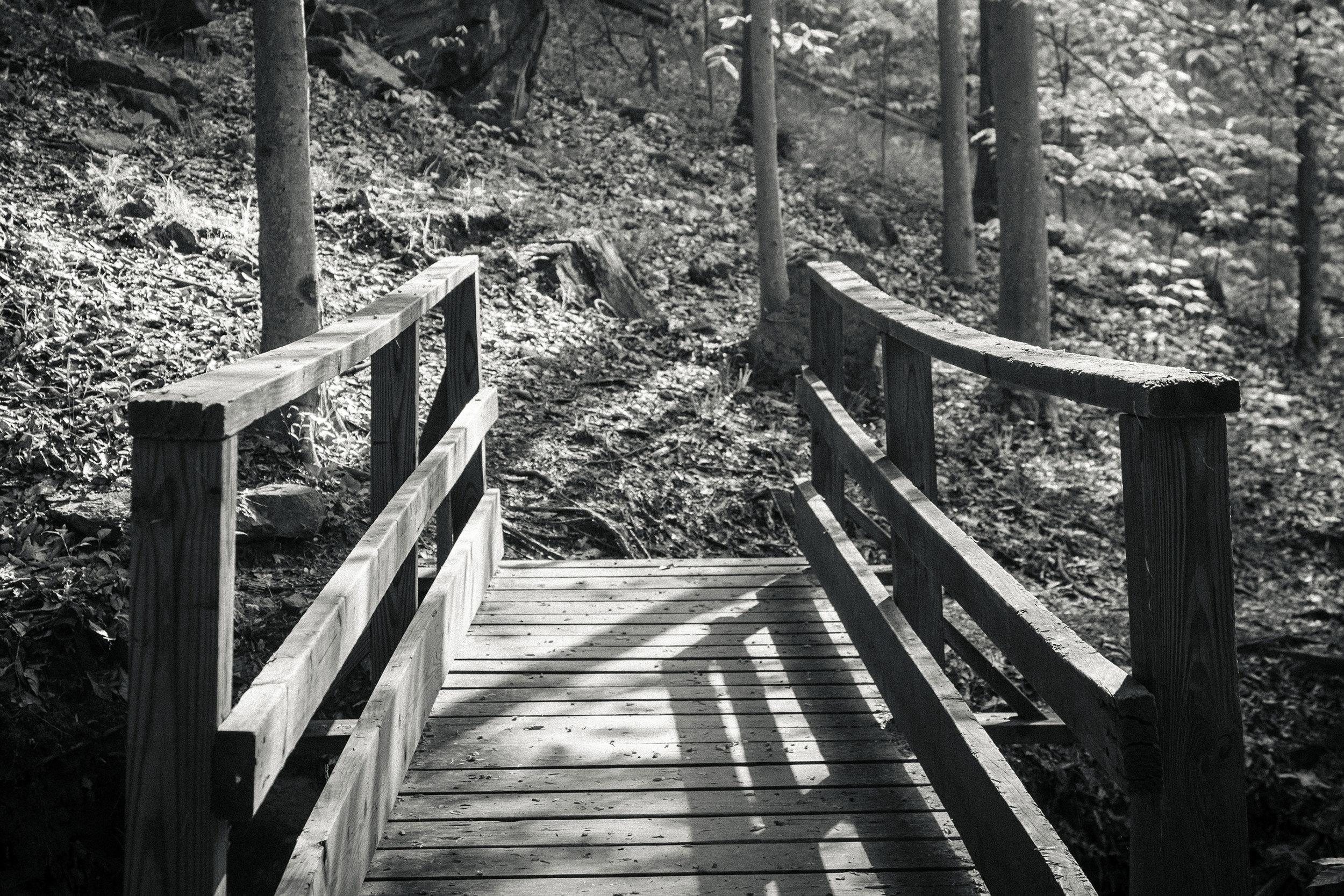 Prince-William-Forest.jpg