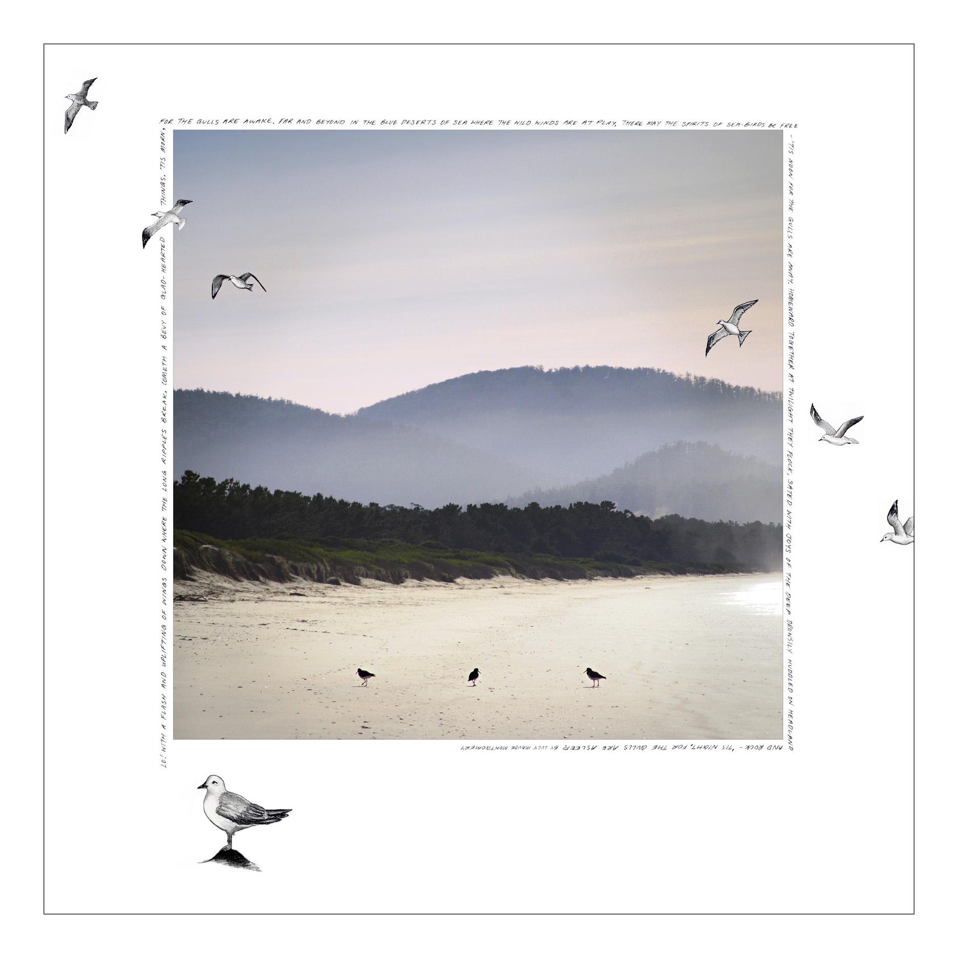 Gulls_AdobeRGB_small.jpg