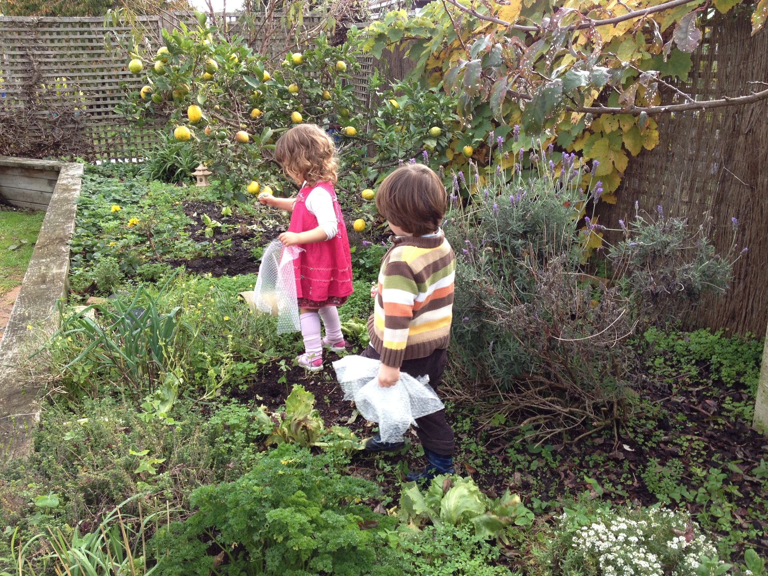 ella hadlee garden 2.JPG
