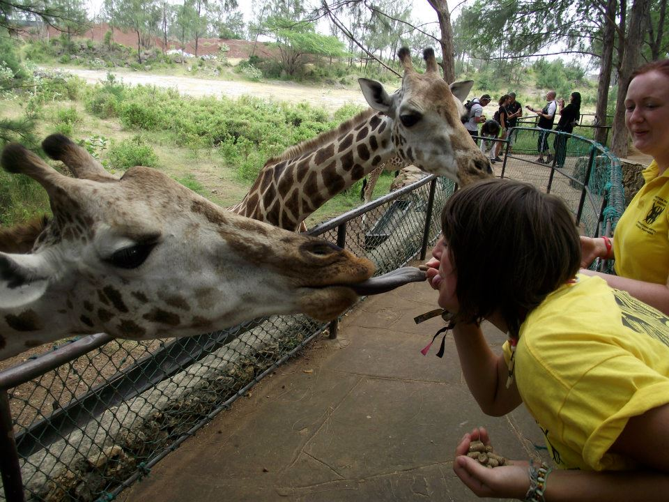 Trying to get a kiss from a giraffe.
