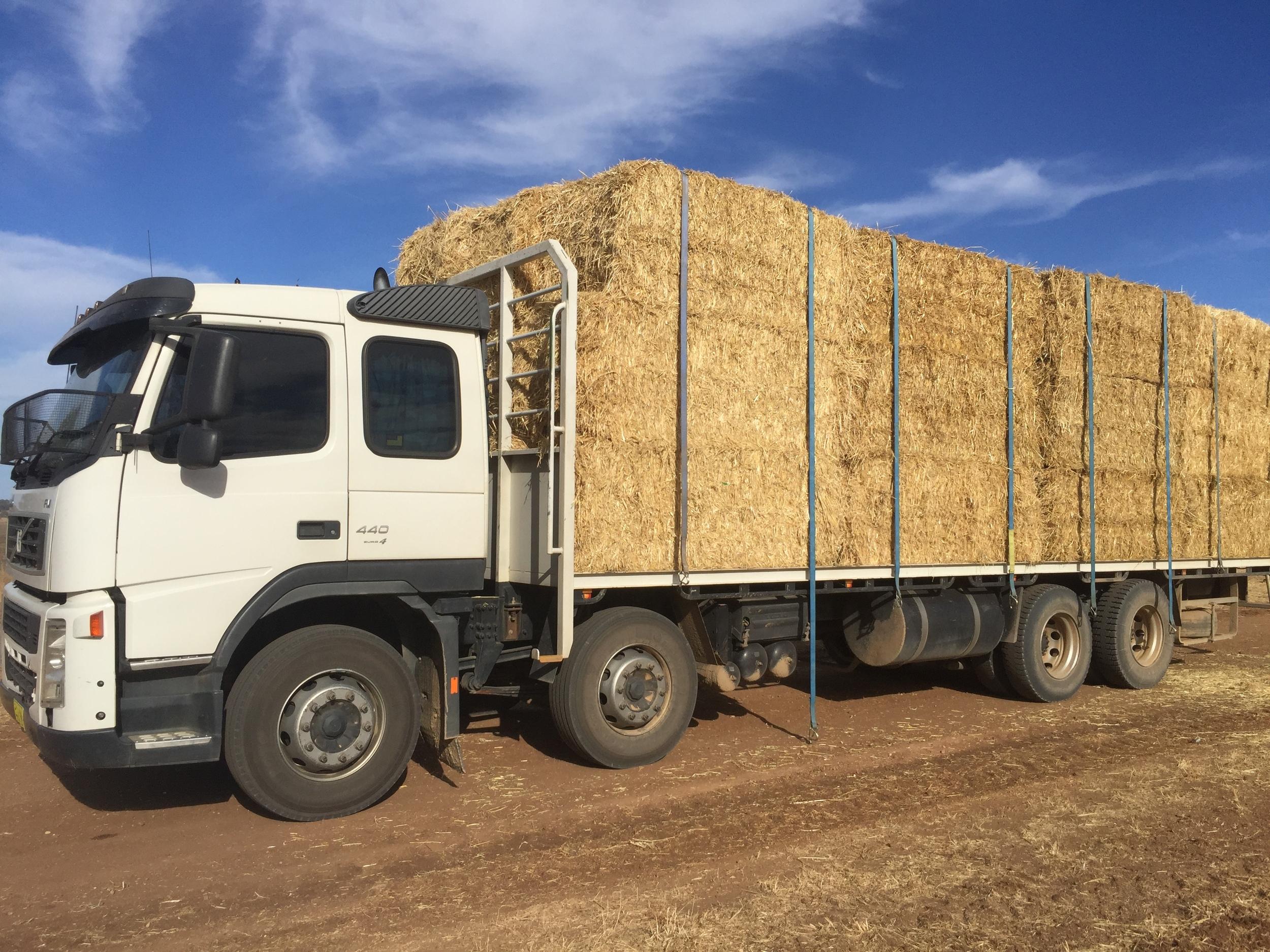 I love hay.