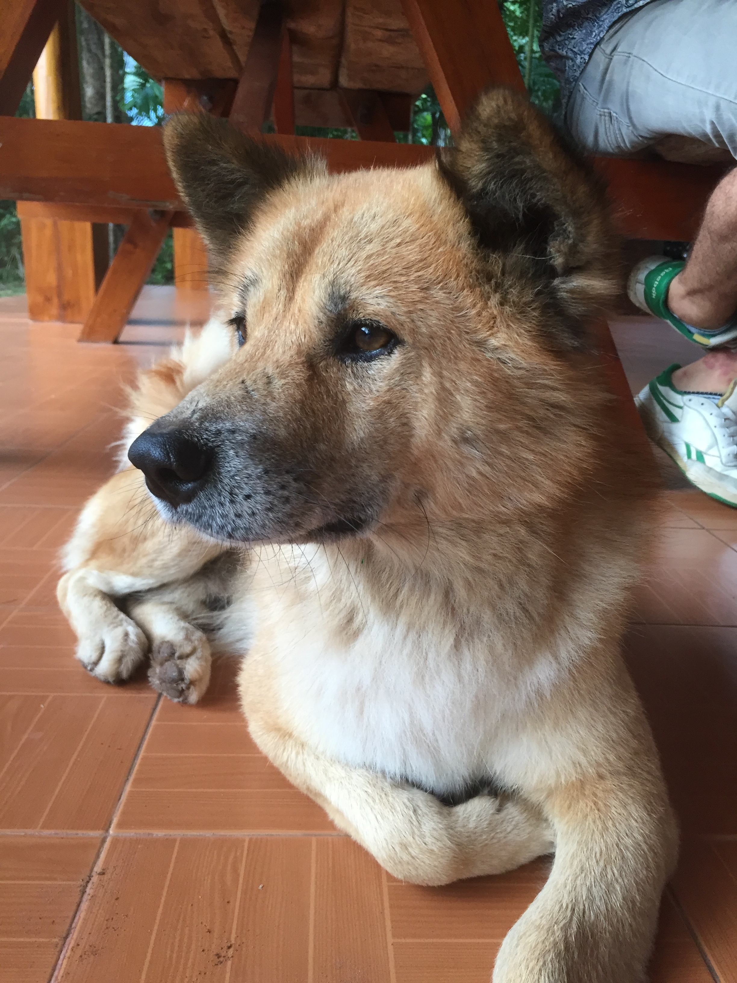 Howling Monastery dog.