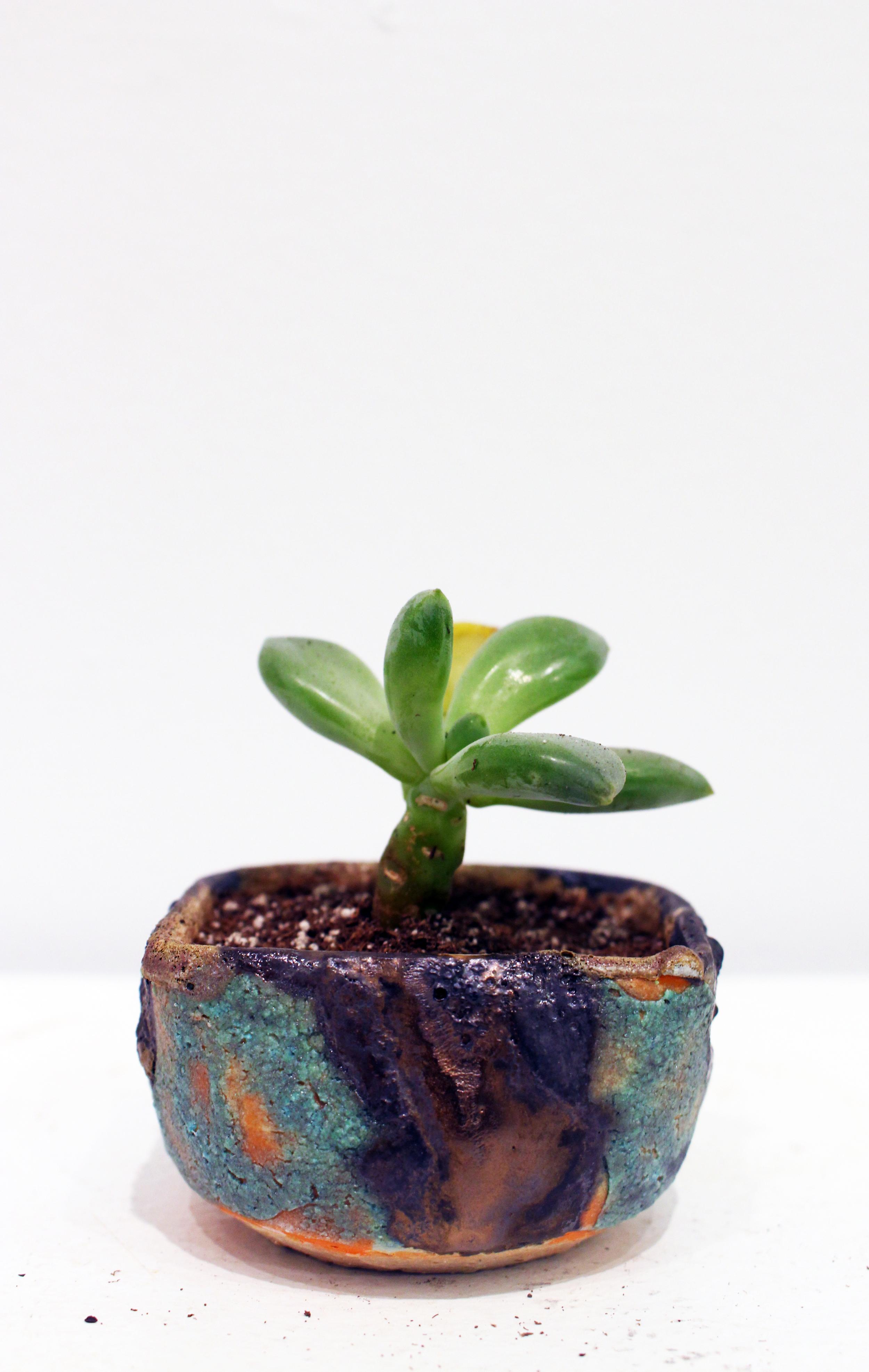 planter_0002.JPG