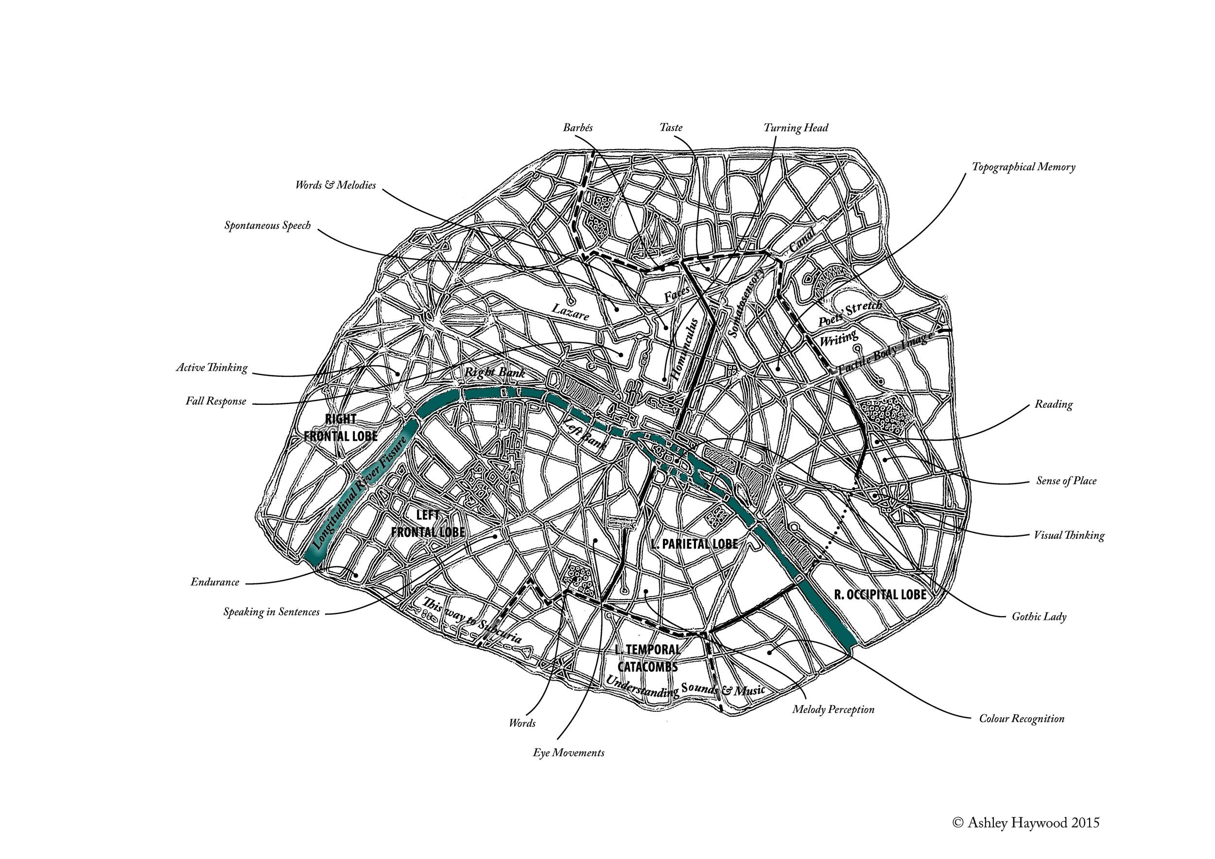 Paris-Brain Map for  Harlequin Blue