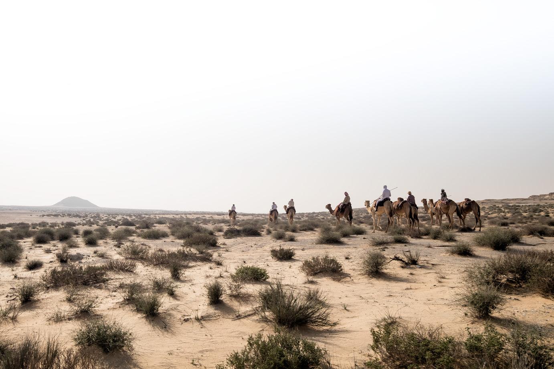 Qatar_national_park_sim_davis_2016.jpg