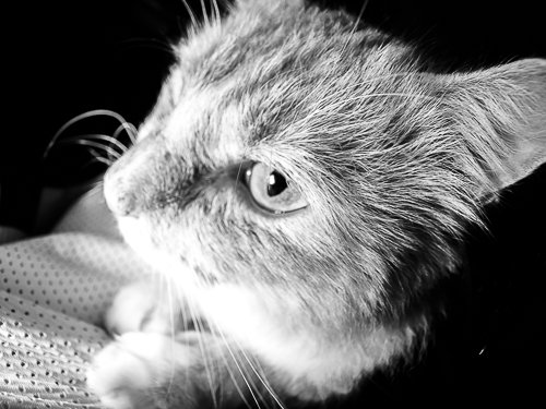 Image of a cat taken by Samgold Photography in Orlando, FL
