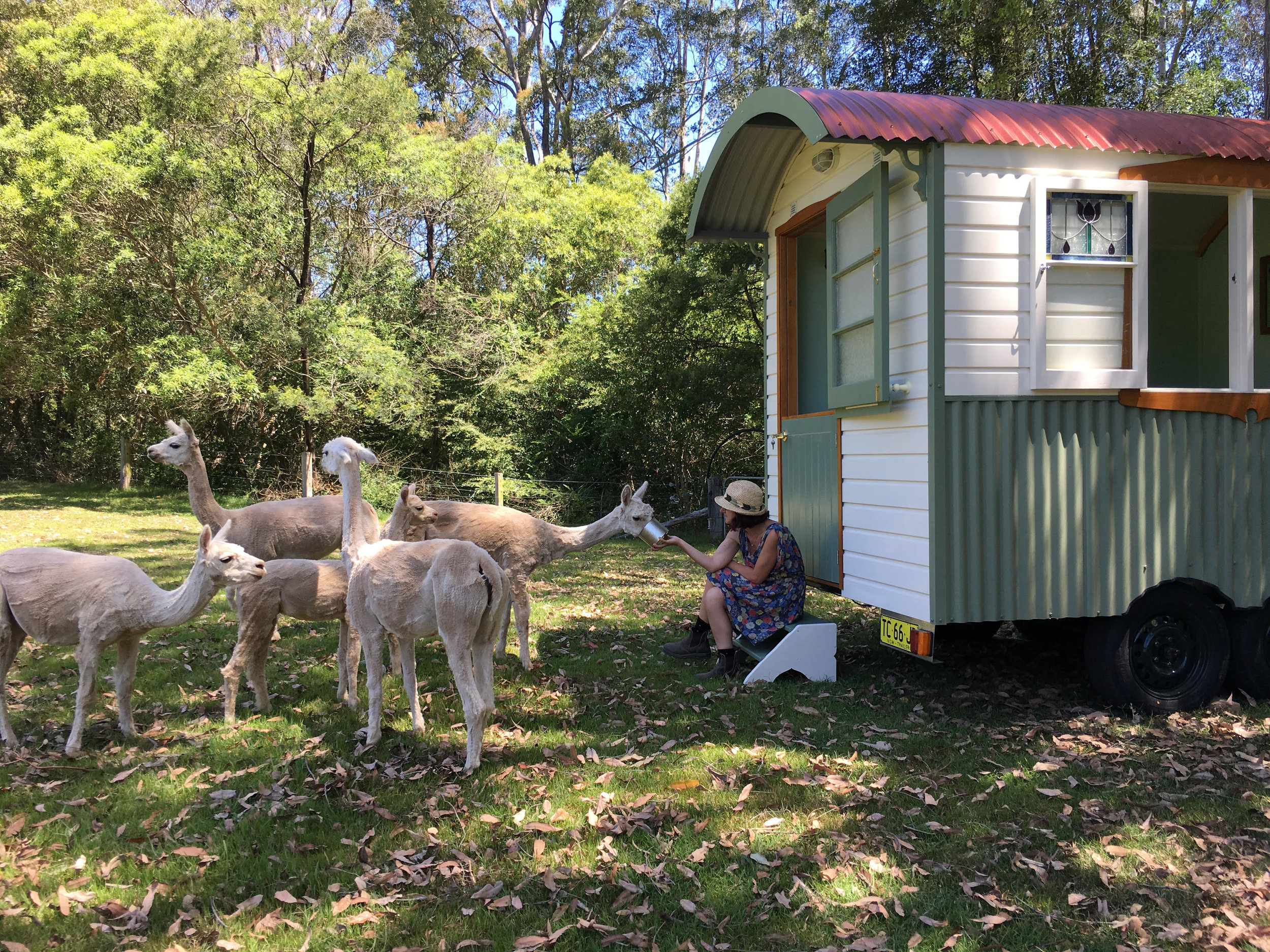 alpaca hut.jpg