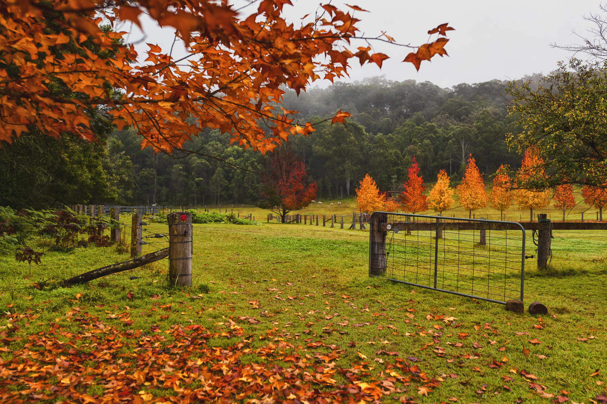 Tree change occurs Autumn so make the most of this beautiful farm in the Hunter Valley.  Book airbnb   https://www.airbnb.com.au/rooms/16481553?s=51
