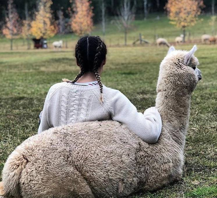 9. Sleep: You will be blissfully relaxed so go on, you deserve it, sleep-in and then you can play with the alpacas later.  Daniela Riccio,  Little Valley Farm    Photo courtesy of Melbic and Arlie4Cake  Explore more  Visit Wollombi  &  Little Valley Farm - Alpaca Farm