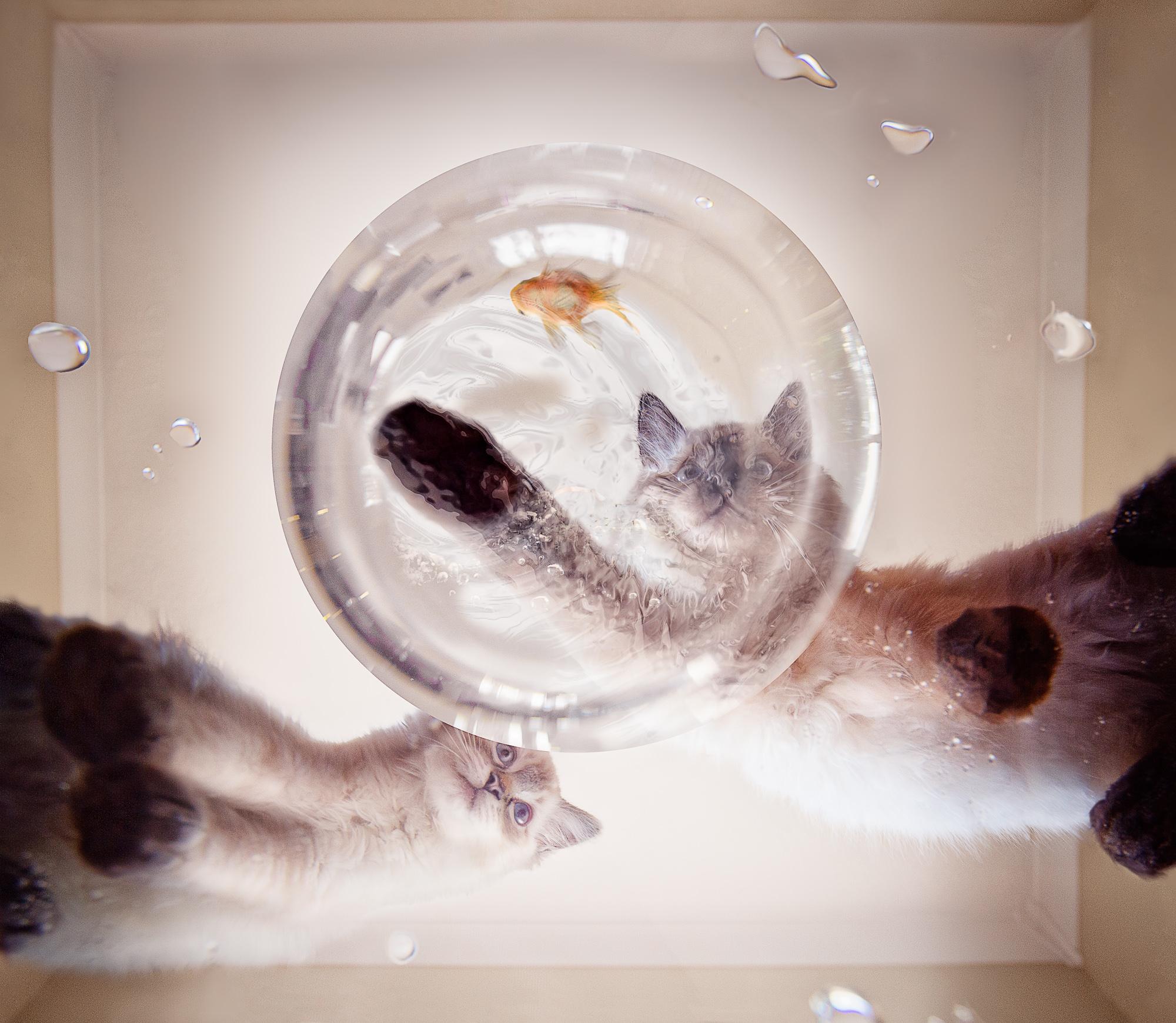 Tracy Willis-Pet Portrait-October-15-UK.jpg